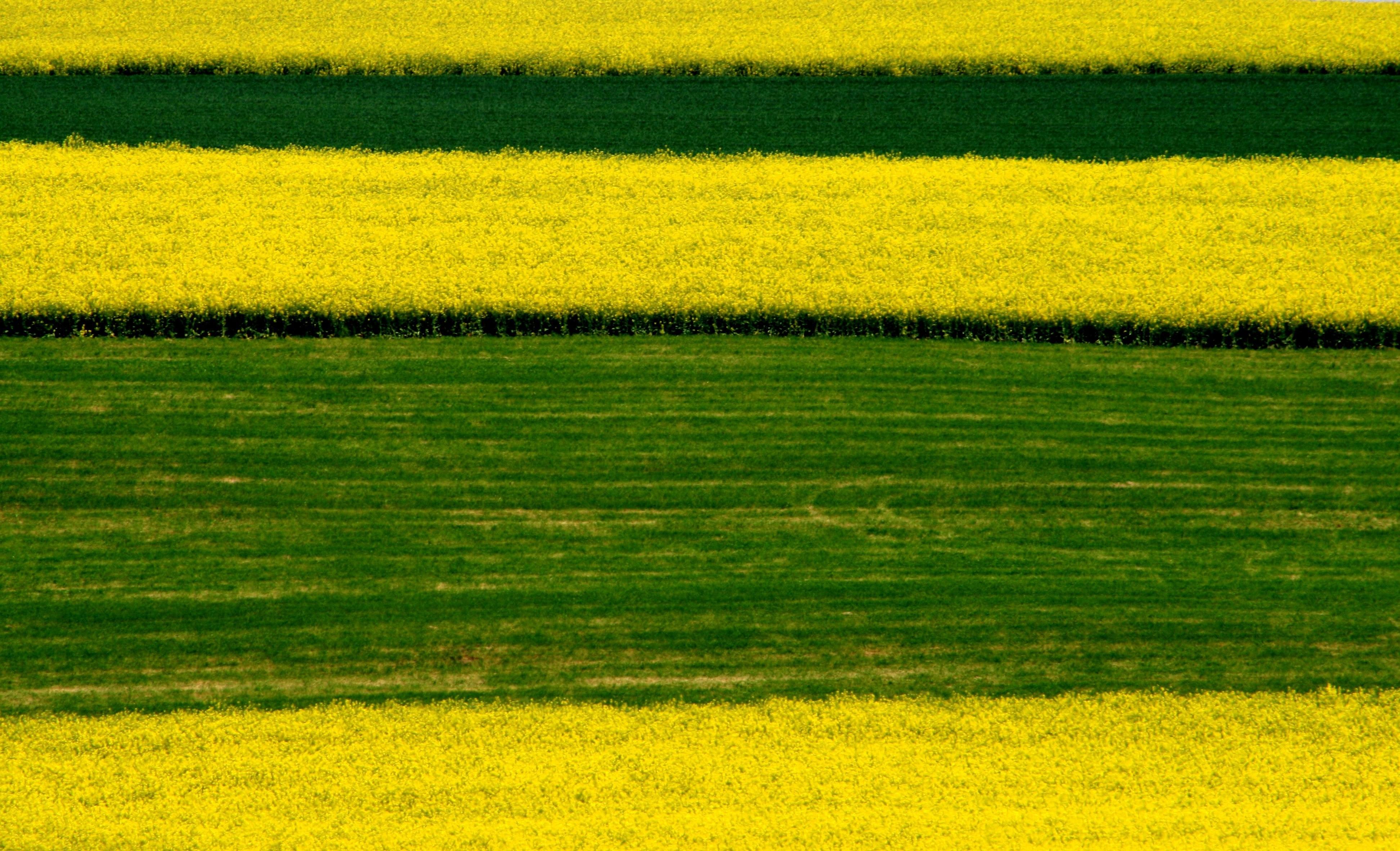 твоя картинки с зеленым полем и словом инфинити картинки рабочий