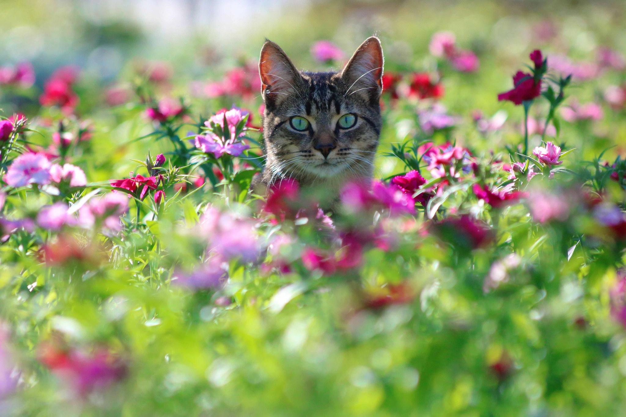 Tapety Kolorowy Kot Zwierząt Rośliny Kwiaty 2048x1365