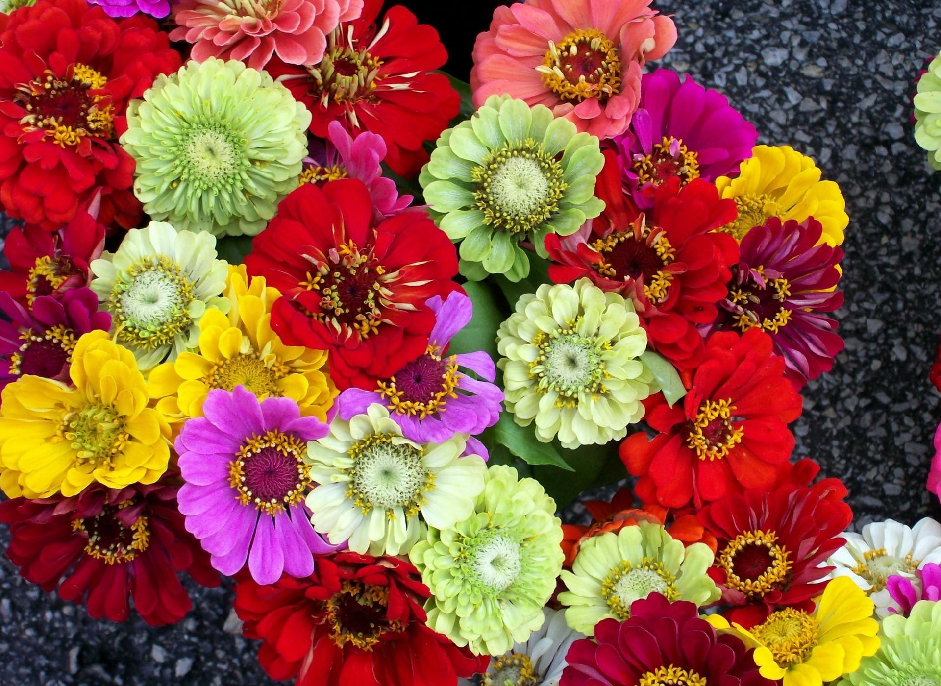 Wallpaper : colorful, flowers, bright, flora, petal, different, land ...