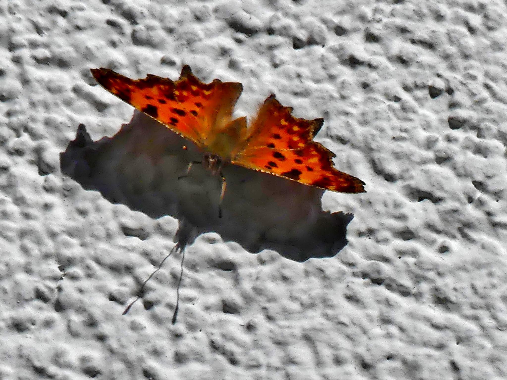 デスクトップ壁紙 カラフル 自然 赤 写真 バタフライ