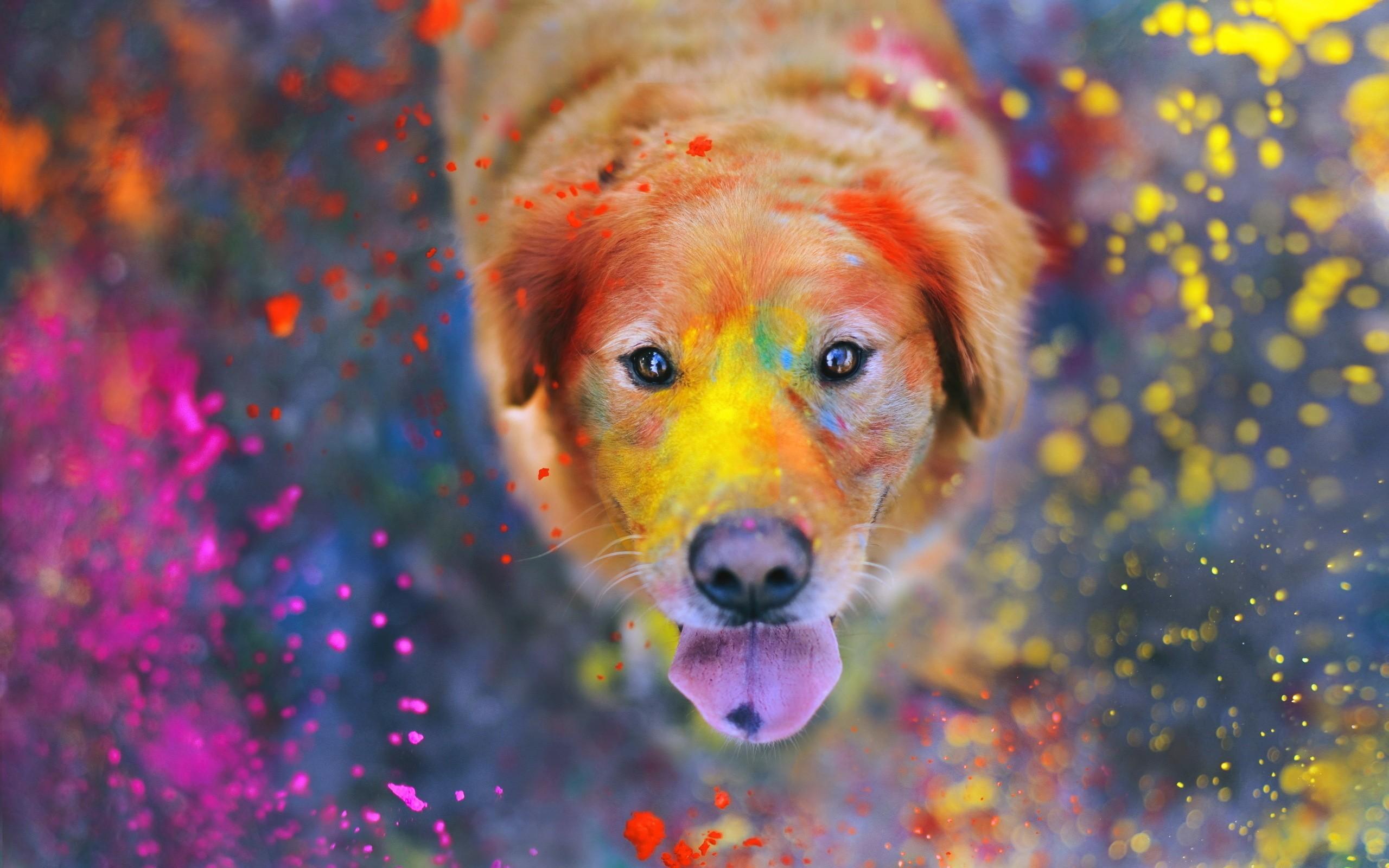 Masaüstü Renkli Boyama Hayvanlar Boya Sıçrama Labrador Köpeği