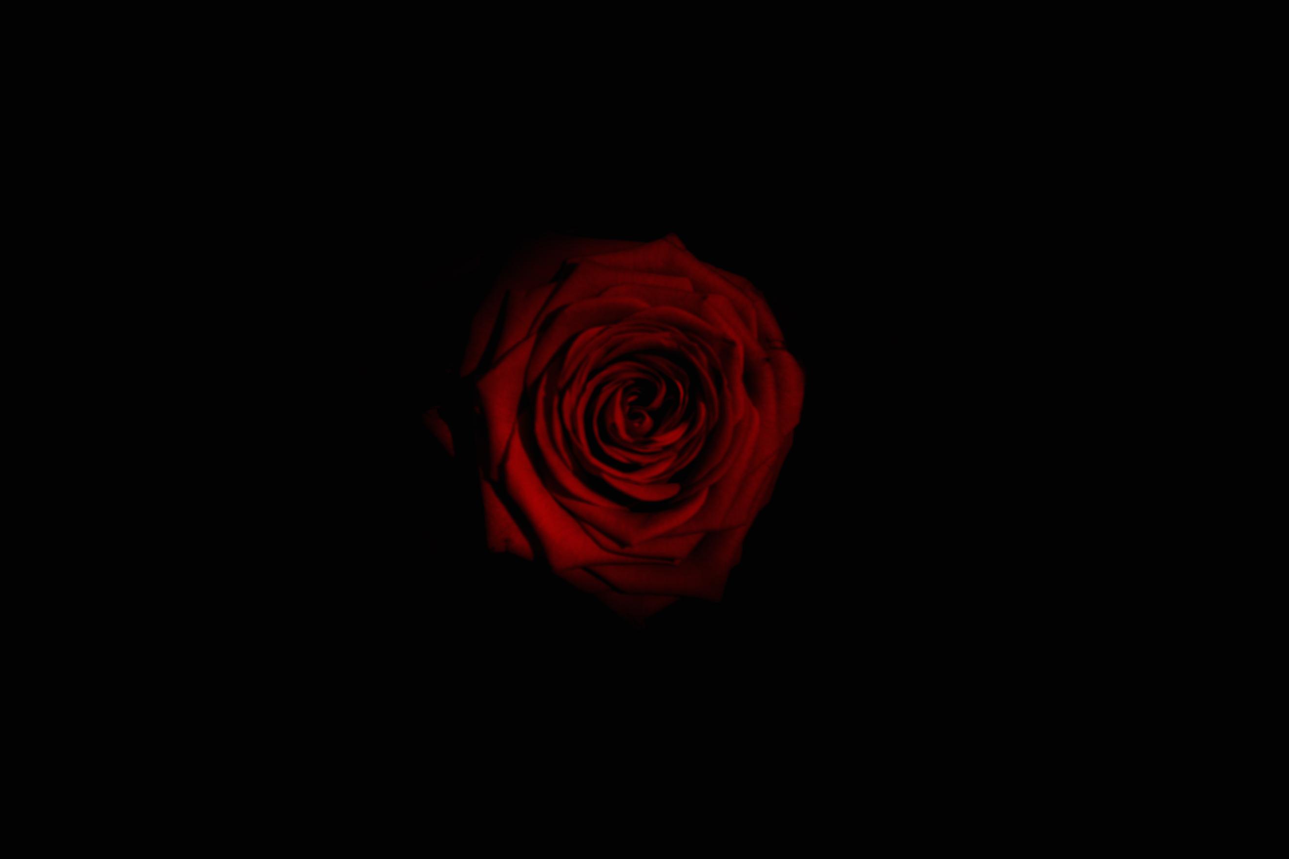 Sfondi Contrasto Nero Buio Fiori Rosso Ombra In Casa