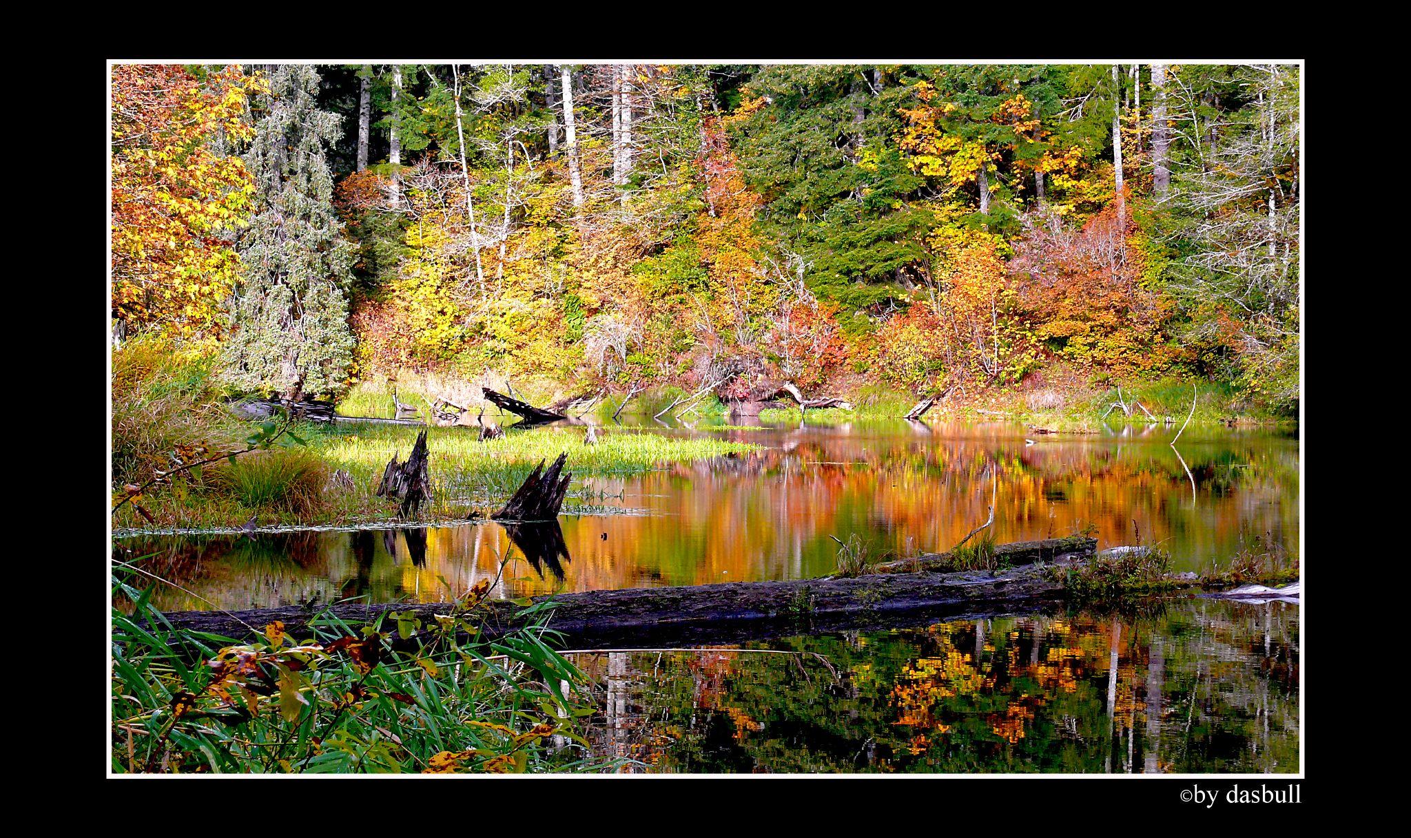 Hintergrundbilder : Kontrast, Wald, Photoshop, dunkel, Natur, Liebe ...