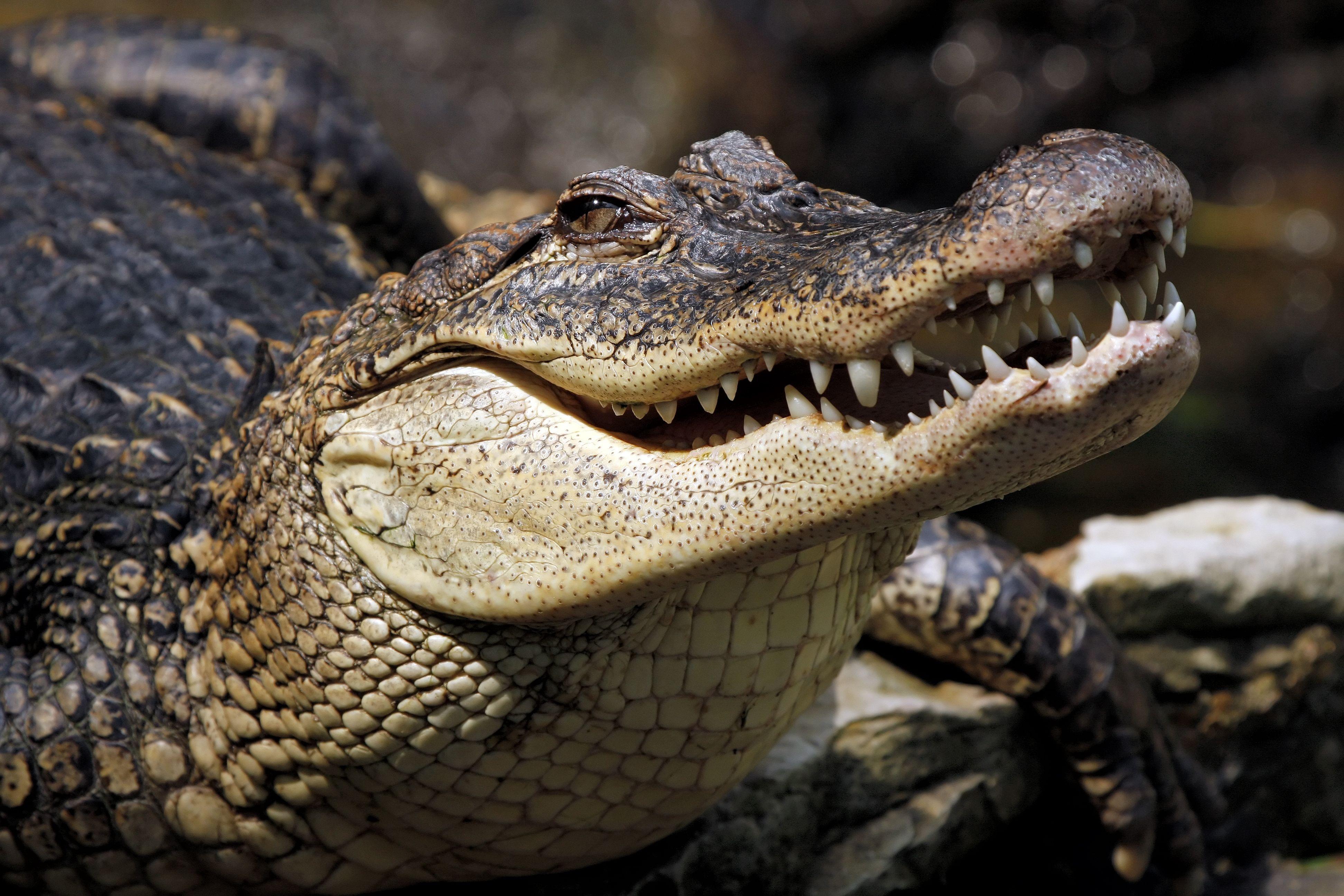 всегда ясно, крокодил фото картинки деянием, благодаря которому