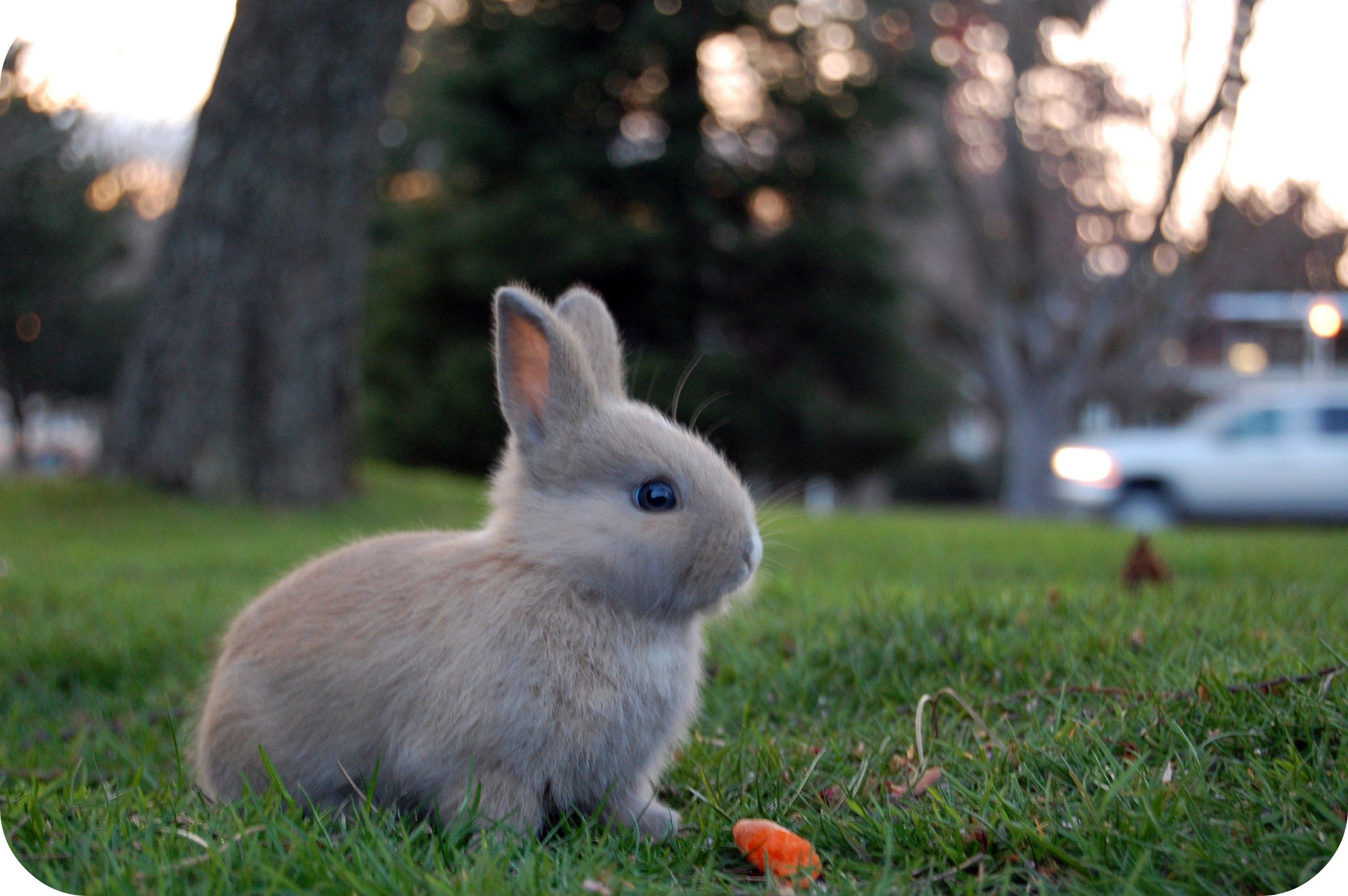 карьеры картинки с кроликами милые линию фотографии