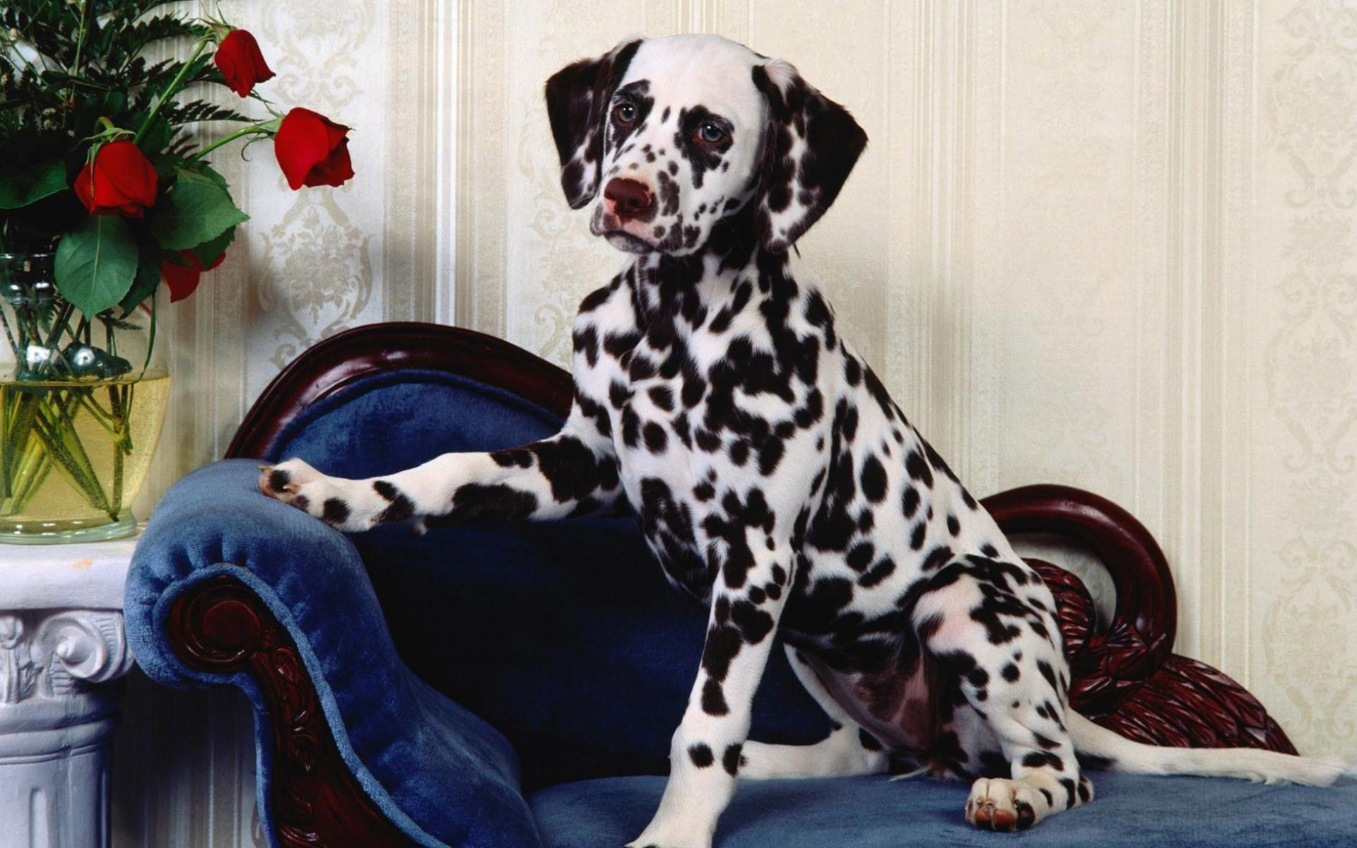 смотреть картинки про домашних собак есть необходимость потребовать