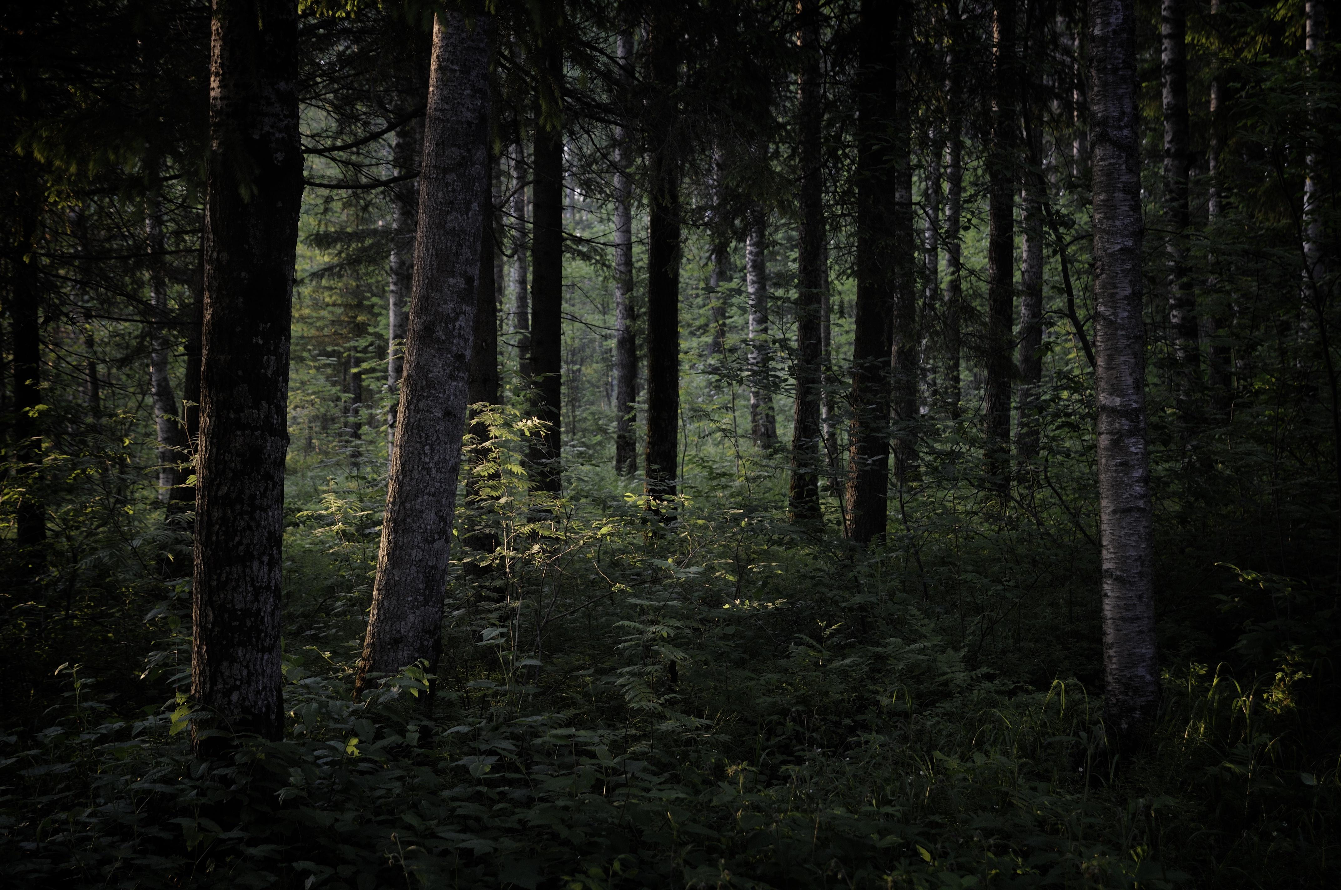 Фото темного леса