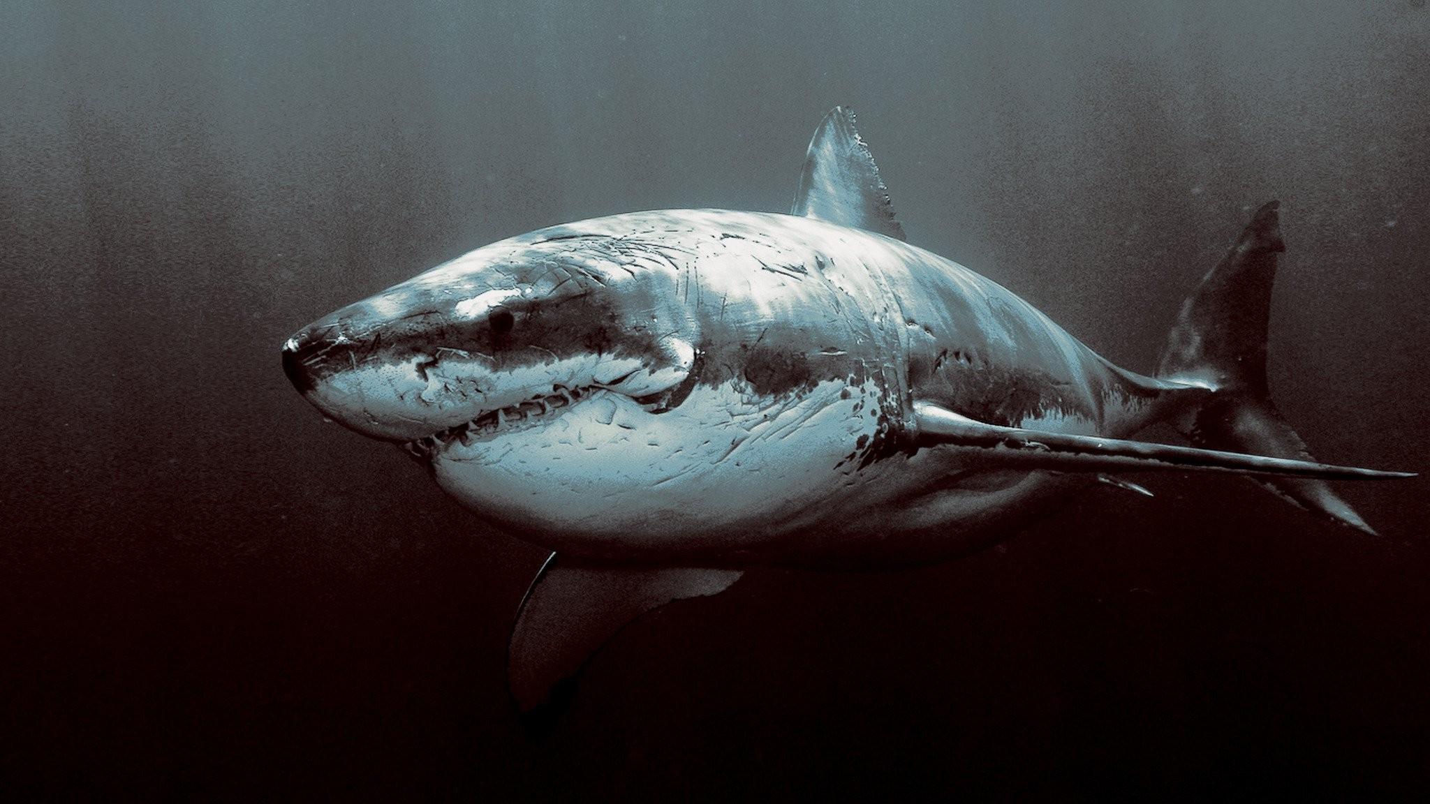 Fondos De Pantalla Oscuro Pescado Submarino Gran
