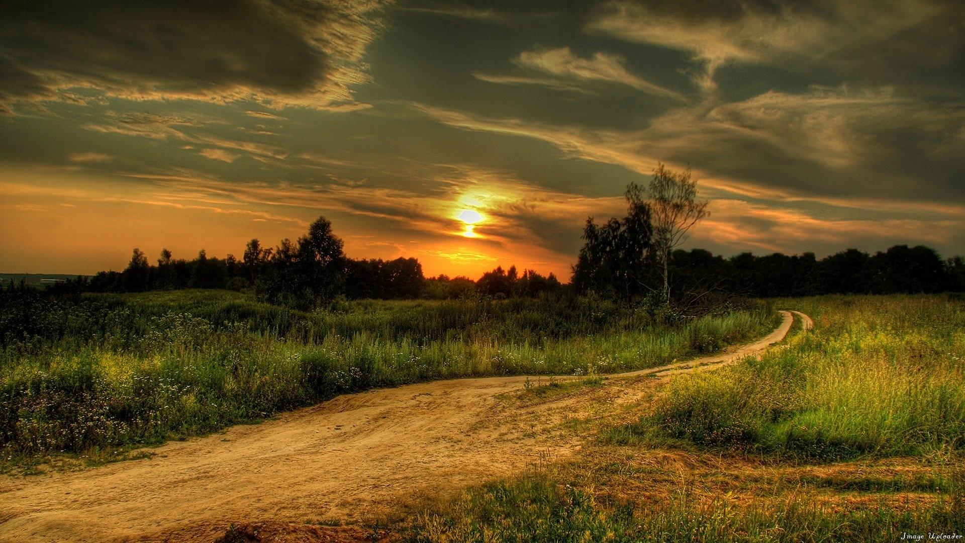 Decline Road Country Signature Evening Twilight Wood Grass Vegetation Summer Field