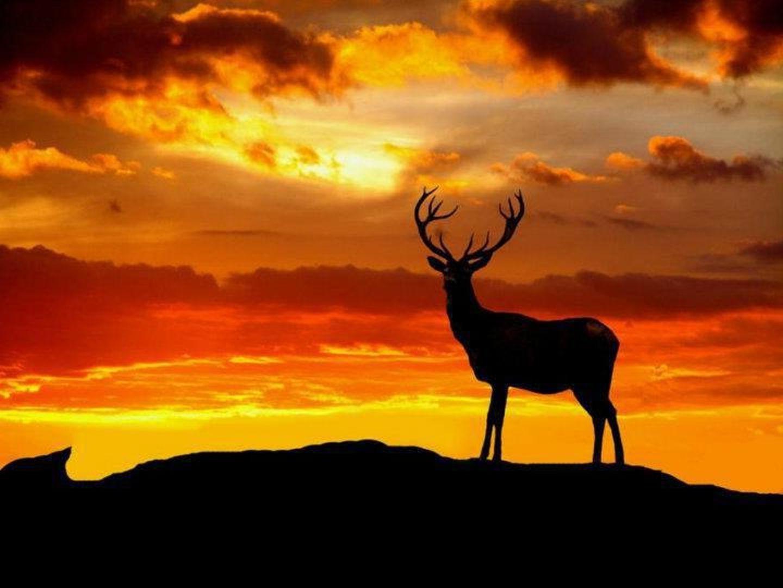 Tapety Jelen Zver Zapad Slunce Priroda Nebe Silueta Svitani