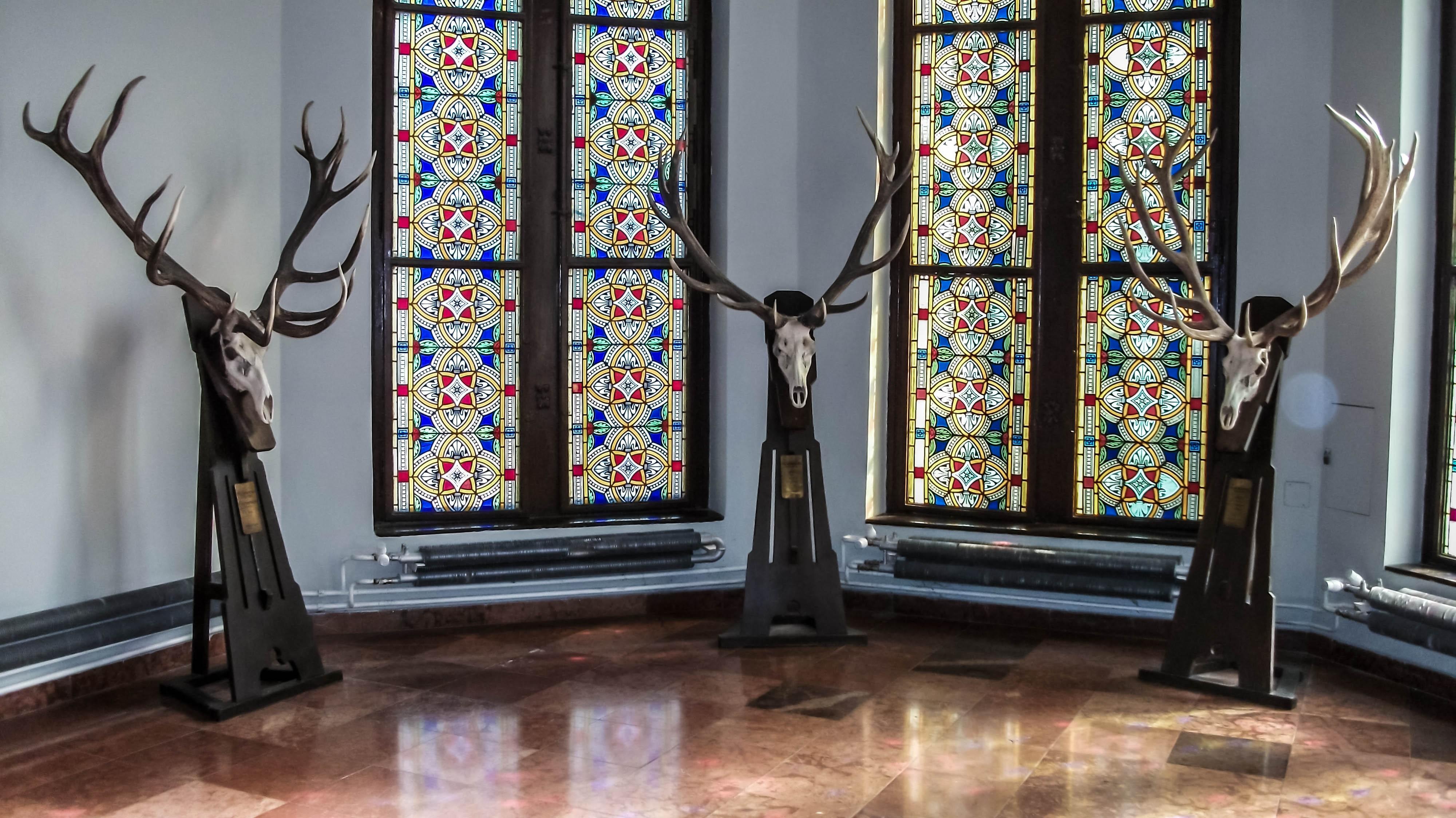 Deer Window Room Glass Curtain Skull Interior Design Stained Glass Antlers  Lighting Material Floor Flooring Living