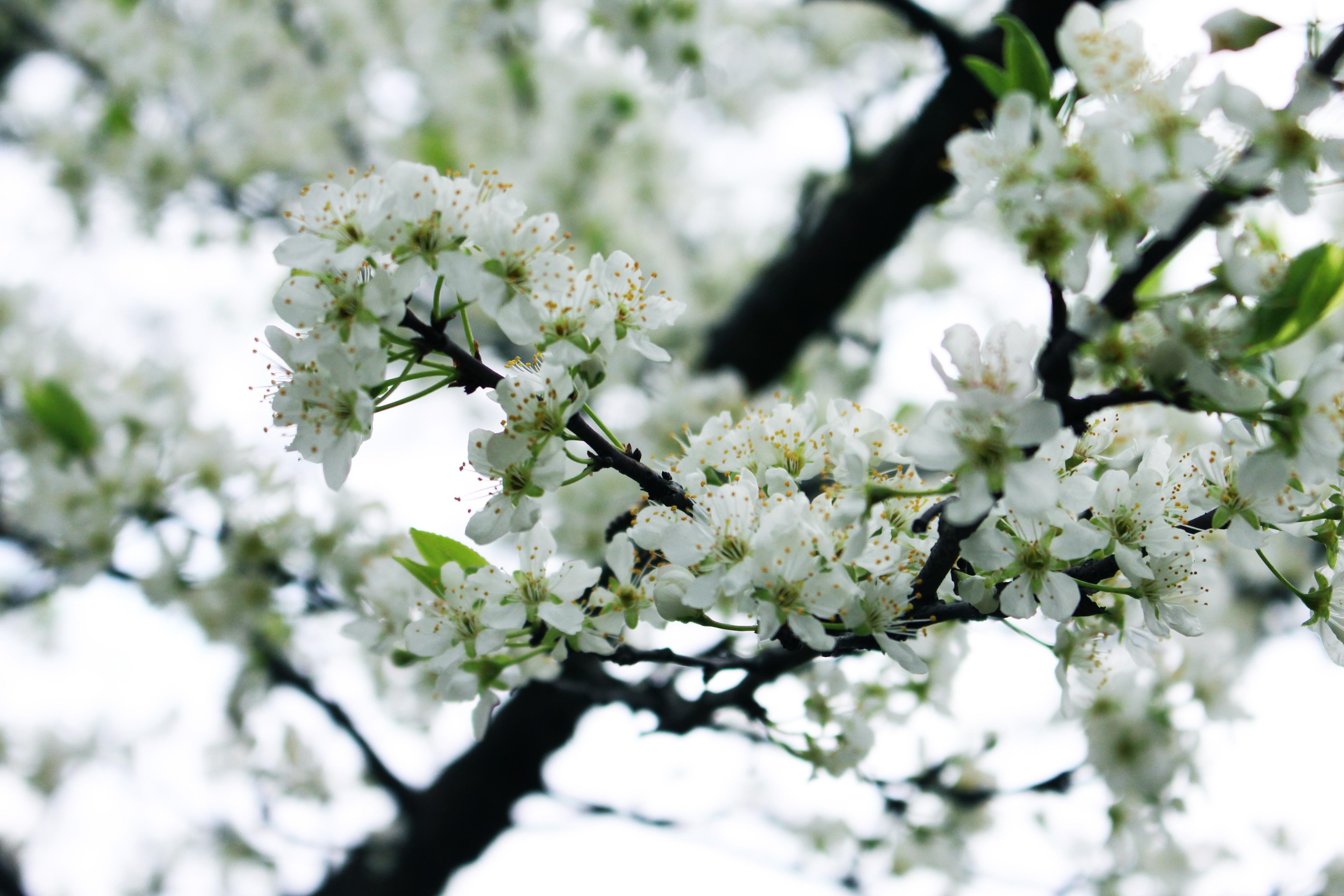 фото весна в апреле когда все цветет замести следы собственного