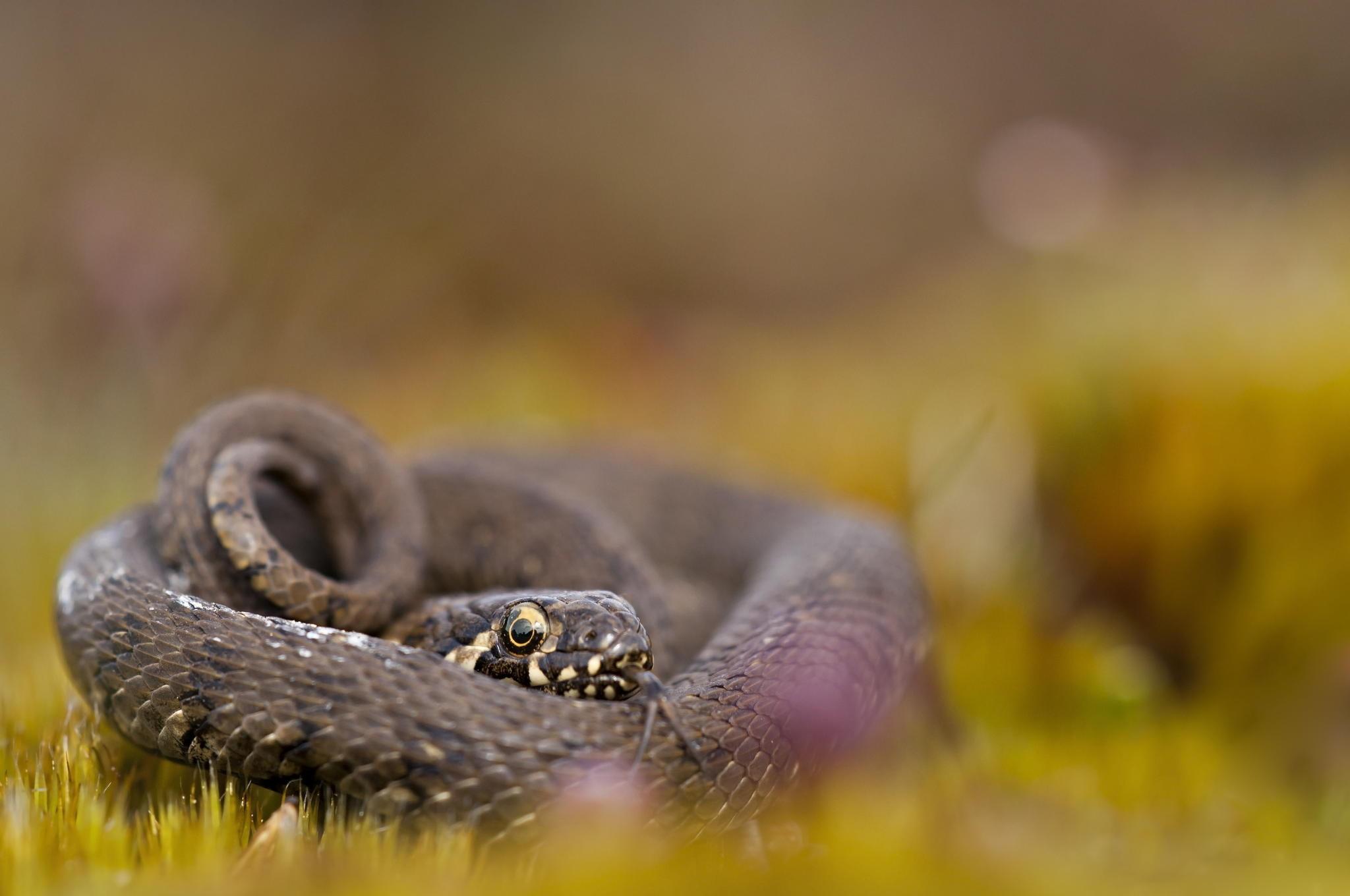 доминант фото макросъемка змеи недостатки кухонных