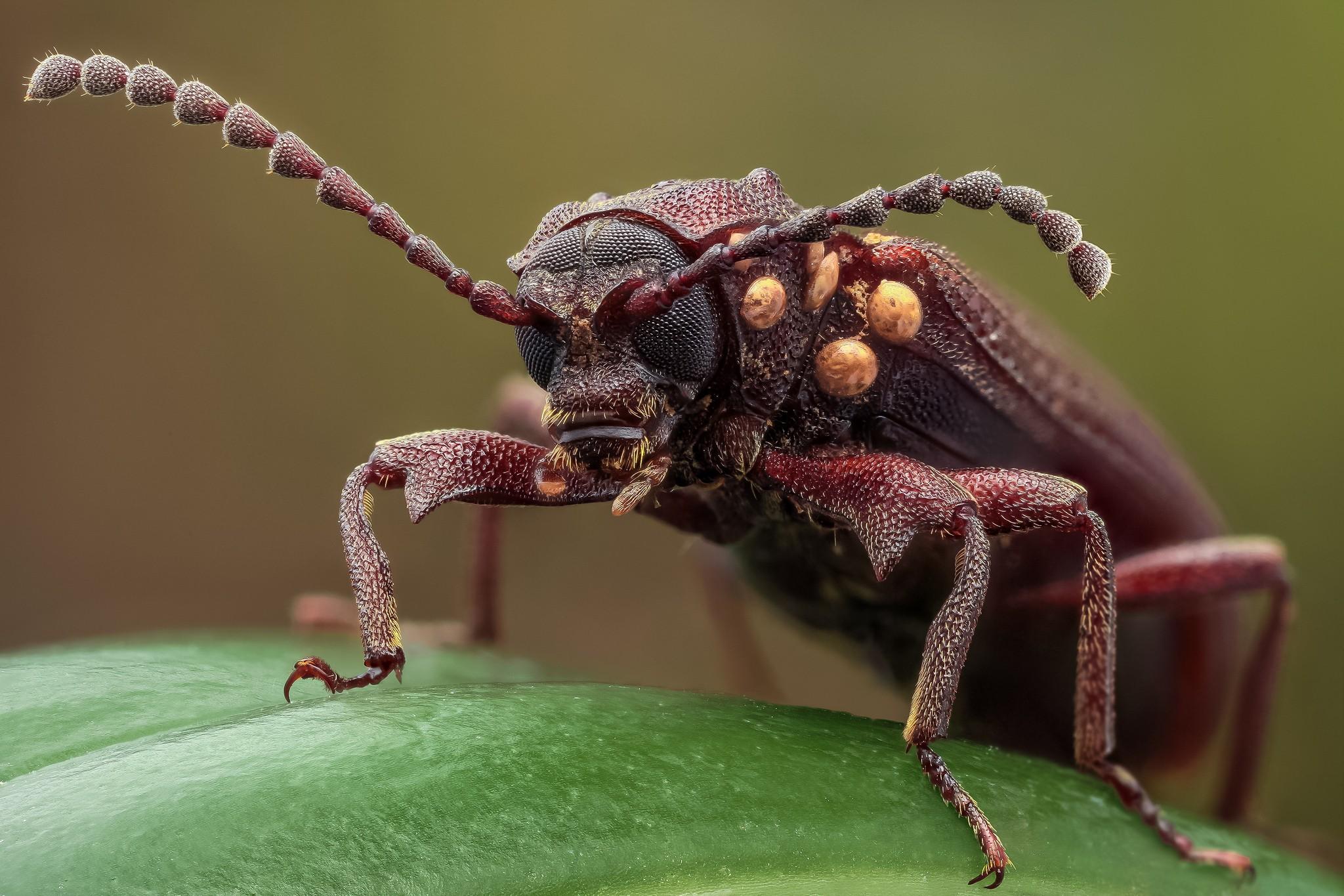 Картинки про разных насекомых
