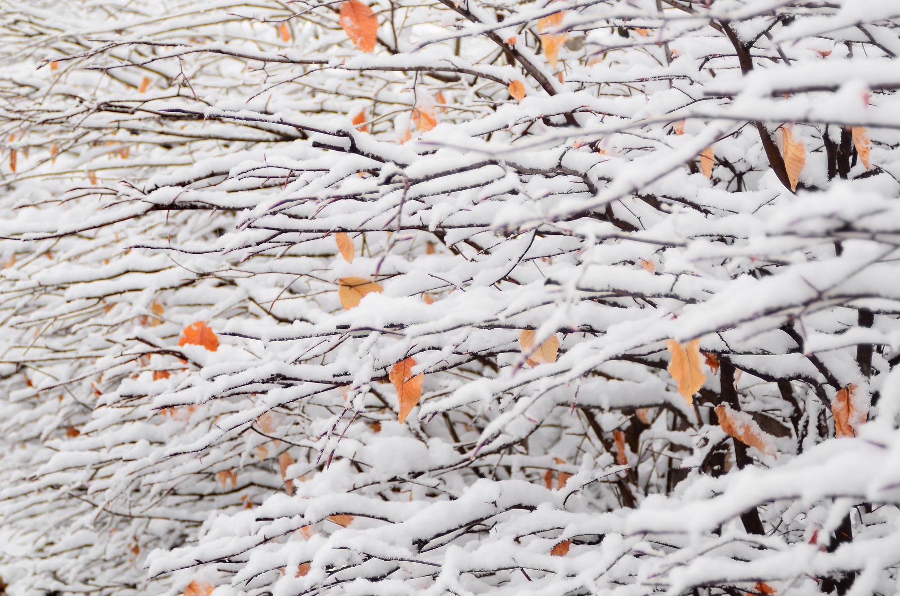 Sfondi del desktop inverno bianca la neve freddo for Immagini desktop inverno