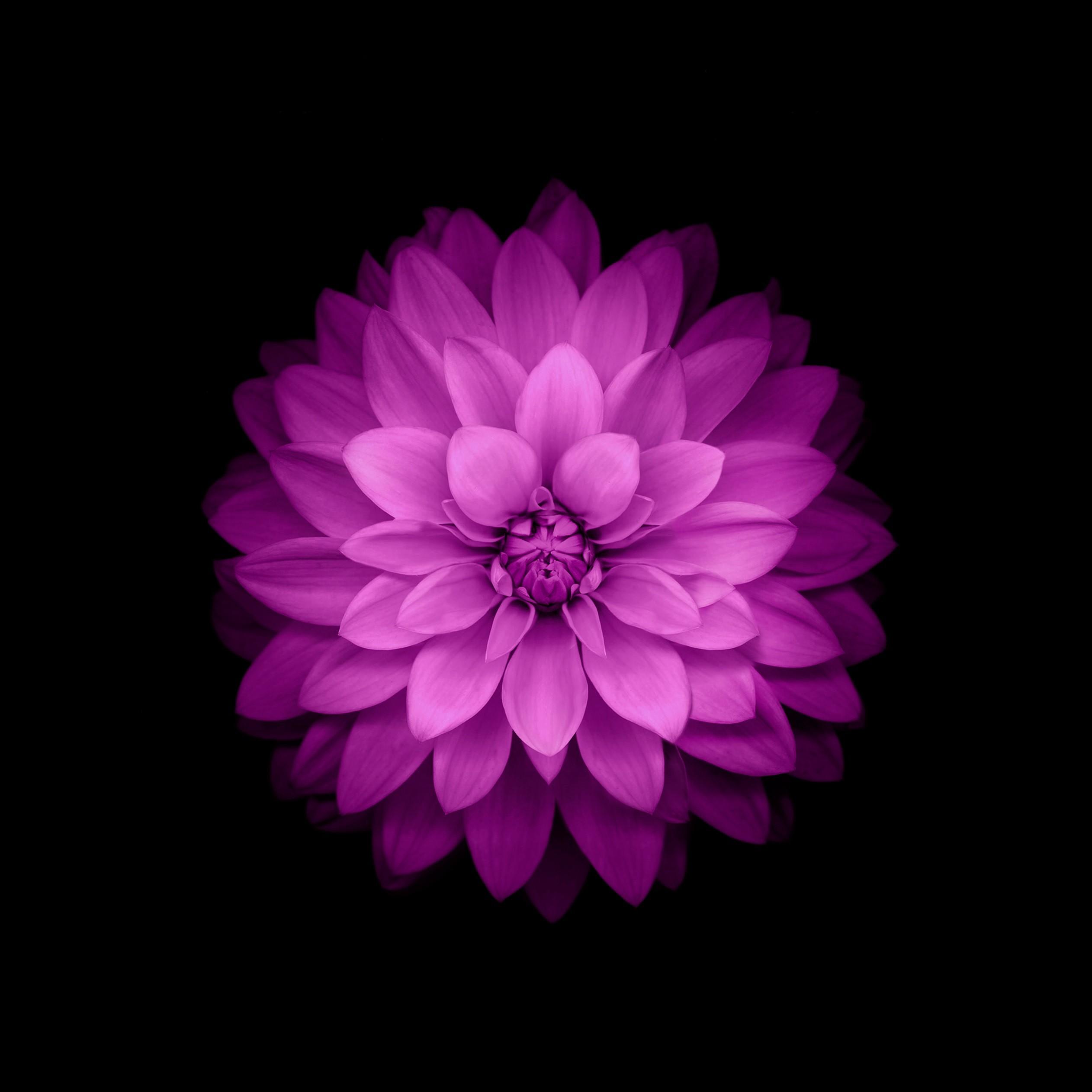 Wallpaper Digital Art Plants Violet Circle Pink Purple
