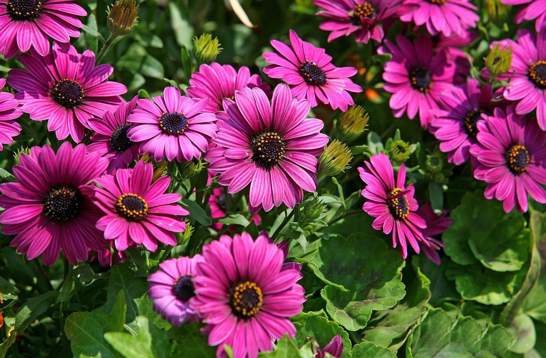 Fotos de flores para salvapantallas 31
