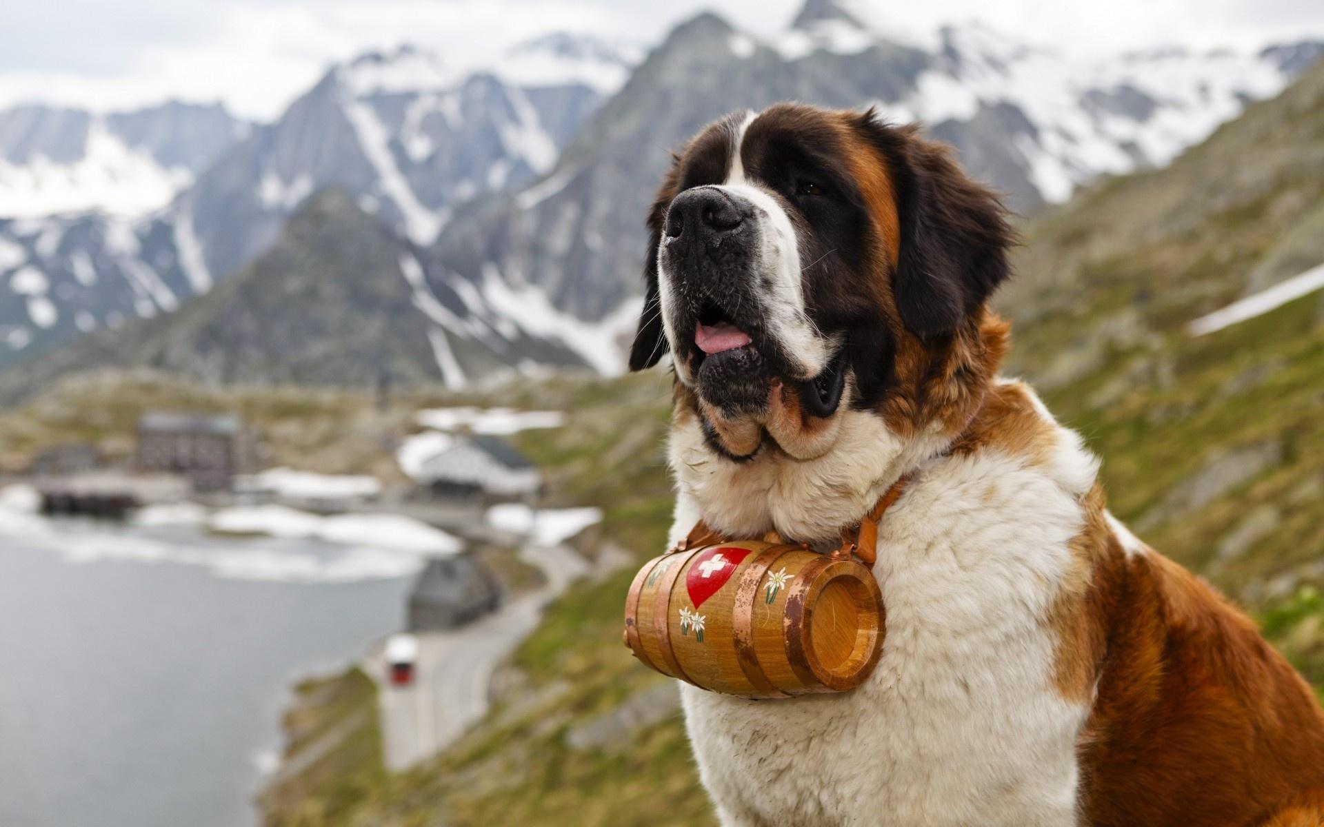 Картинки знаменитых собак