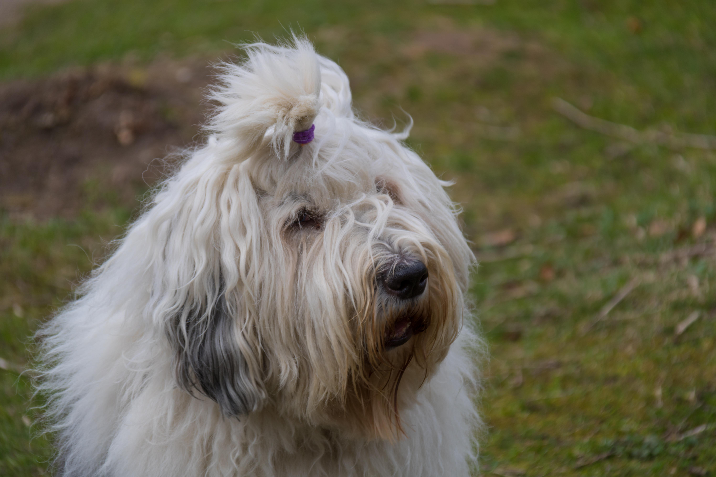 犬 種類 テリア