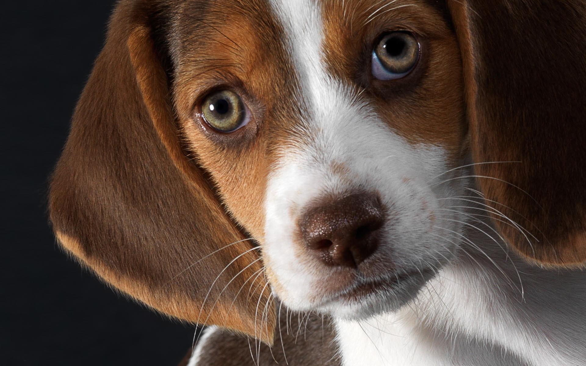 Картинки животные собака