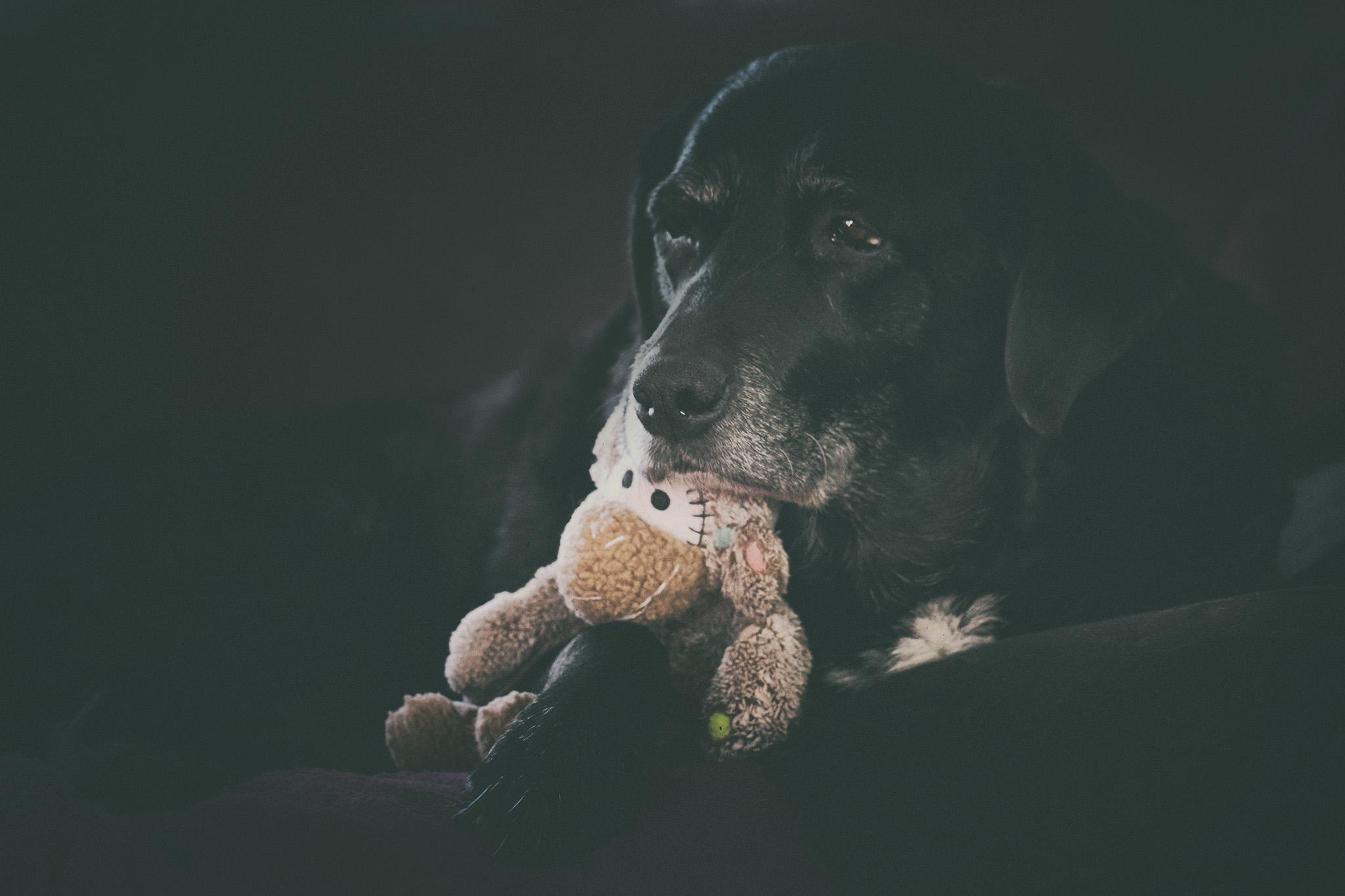 Fabelhaft Haustier Affe Dekoration Von Spielzeug, Knuddelig, Kuscheltier, Affe, Niedlich, Schottland, Ayrshire,