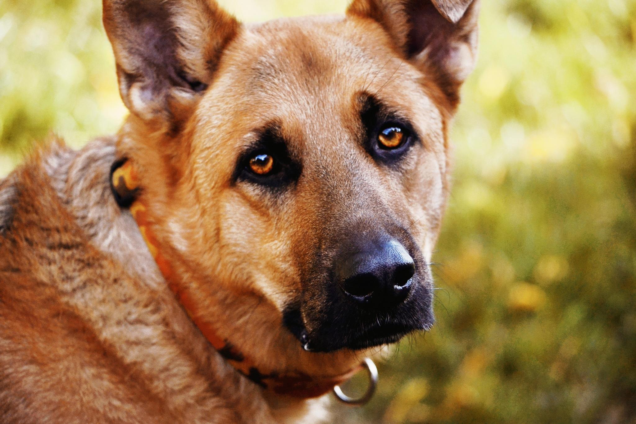 Глаза картинки собак