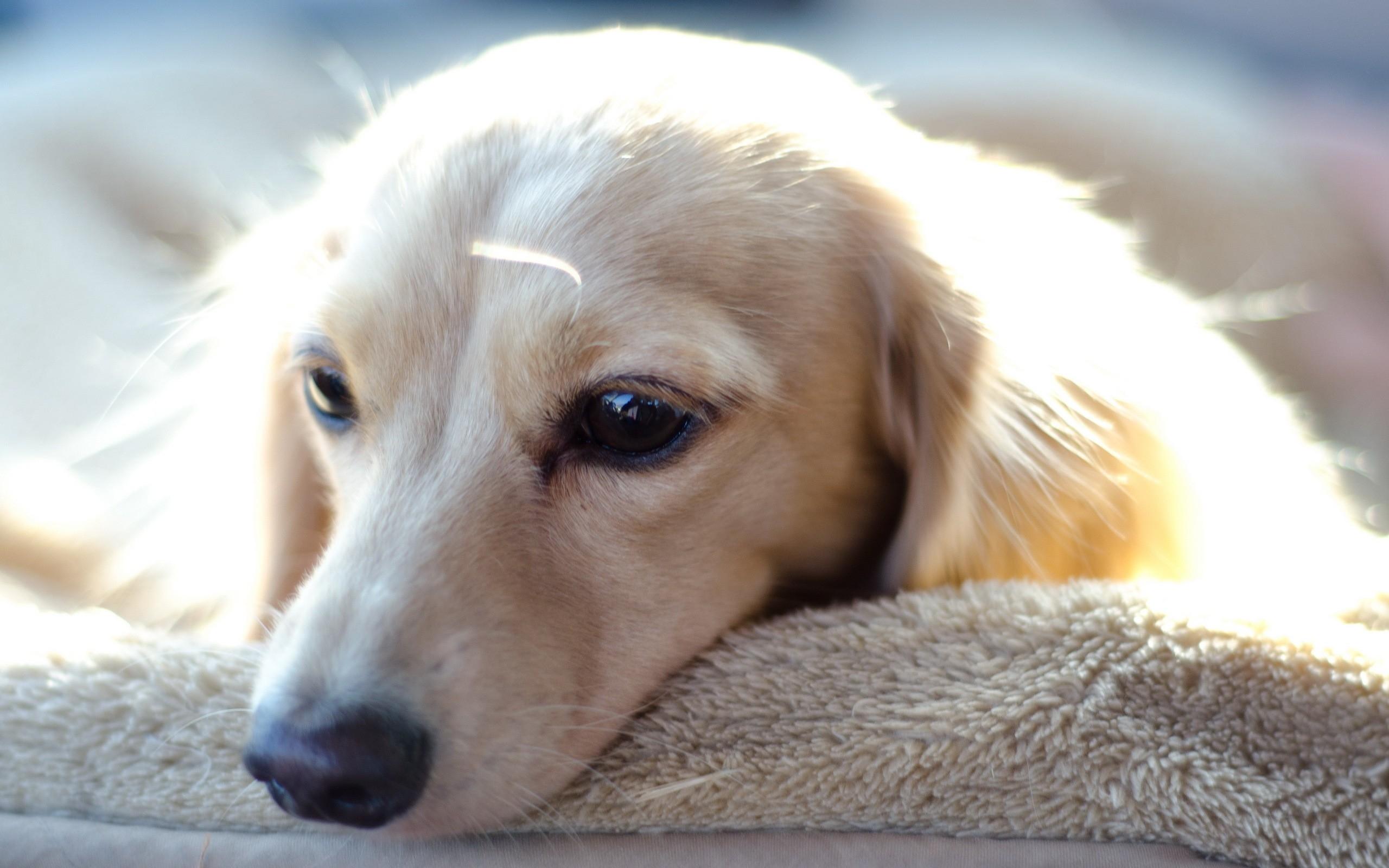 Картинка печальная собака