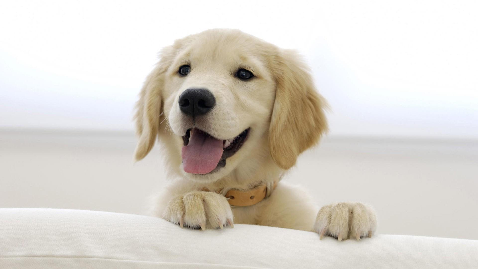 1920x1080 px - Colorazione immagine di un cane ...
