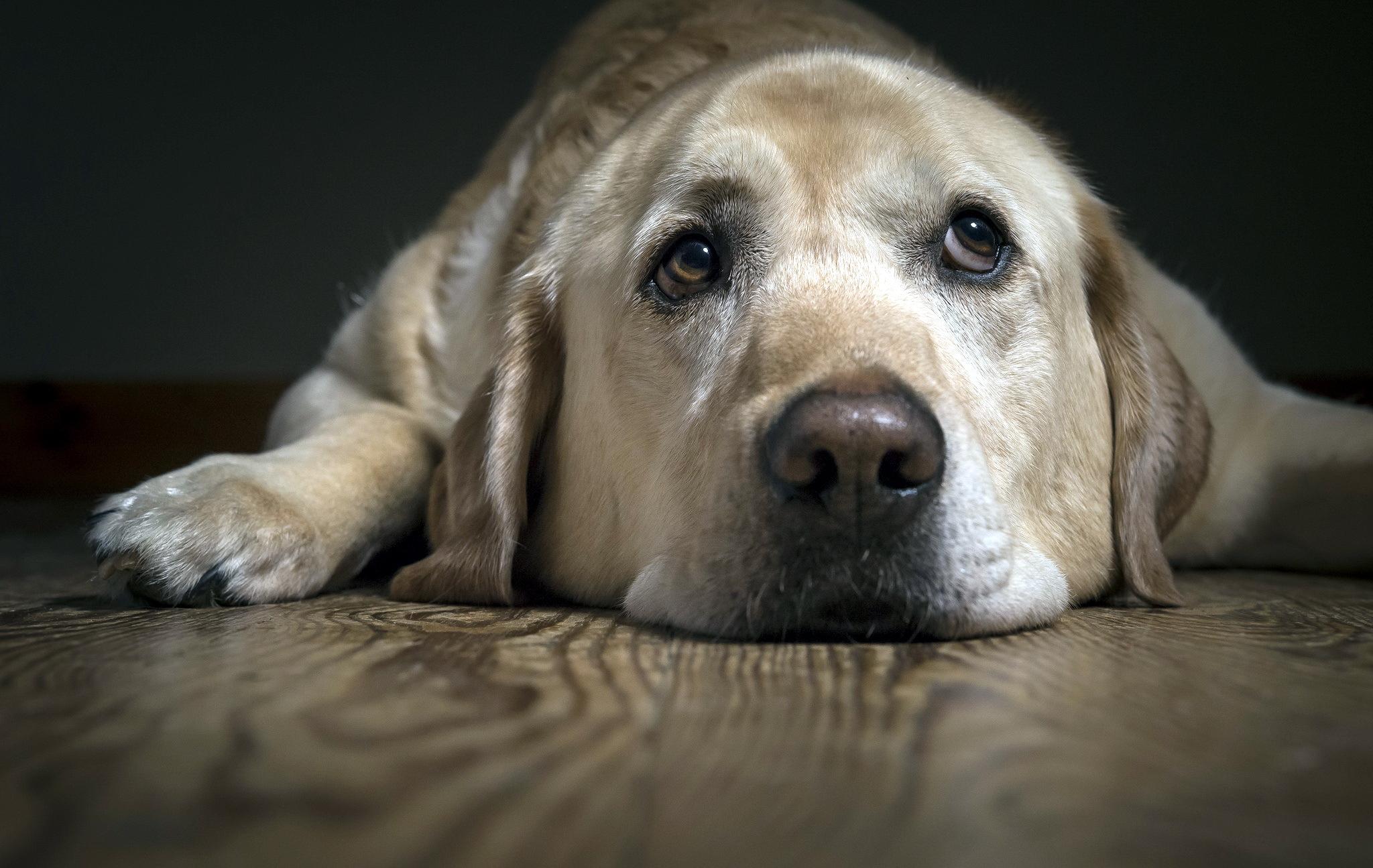 Картинки собаки самой грустной