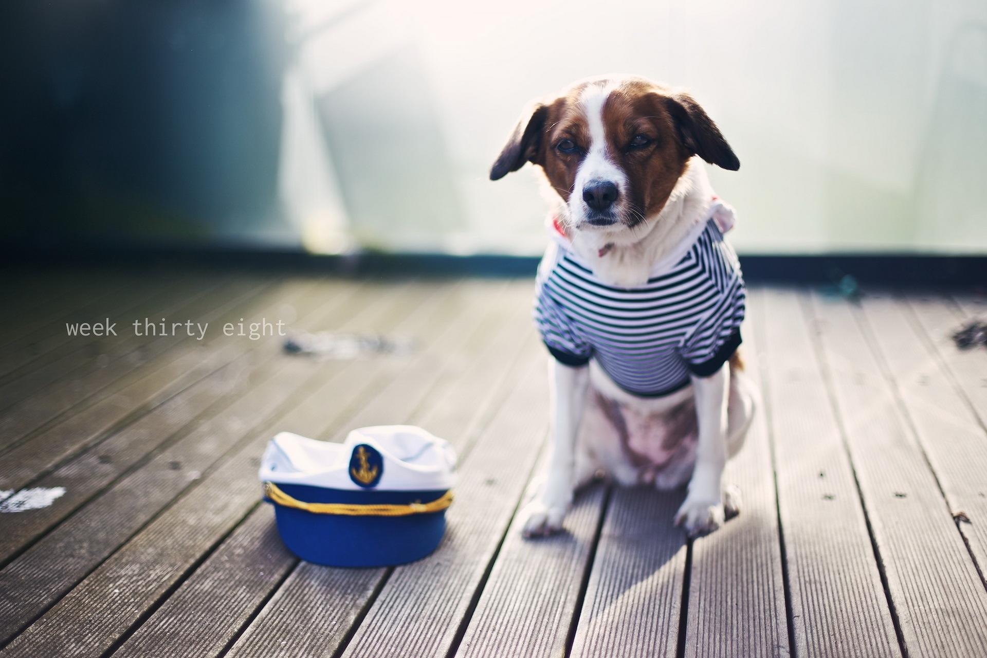 tøj til hund