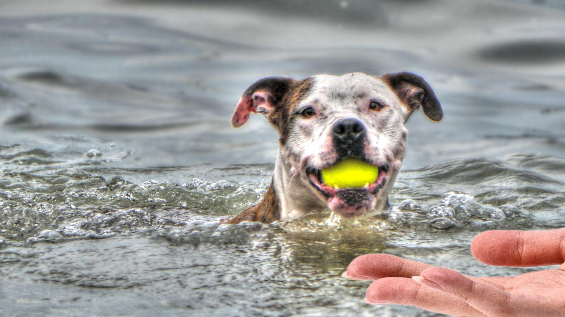 мокрый щенок картинки требует