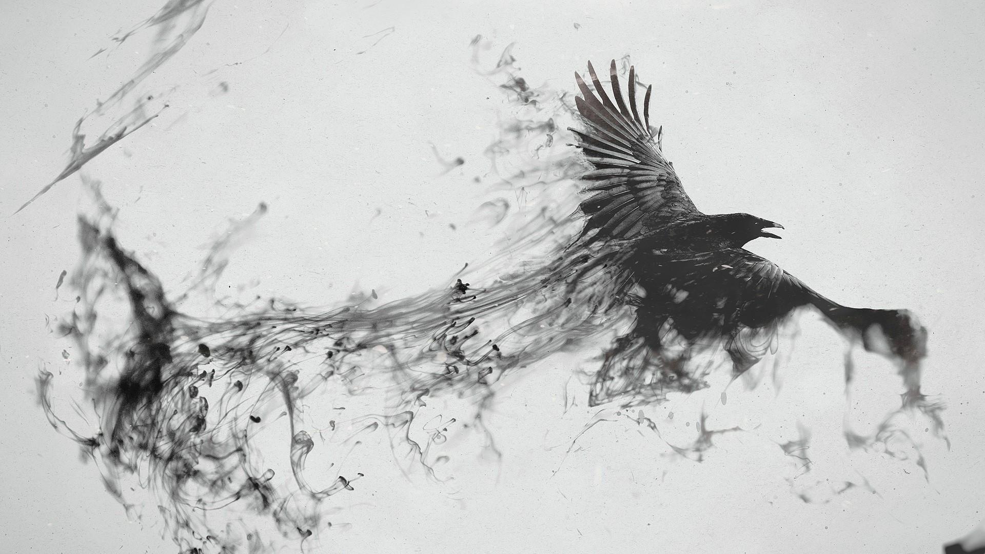 Wallpaper Gambar Burung Burung Satu Warna Burung