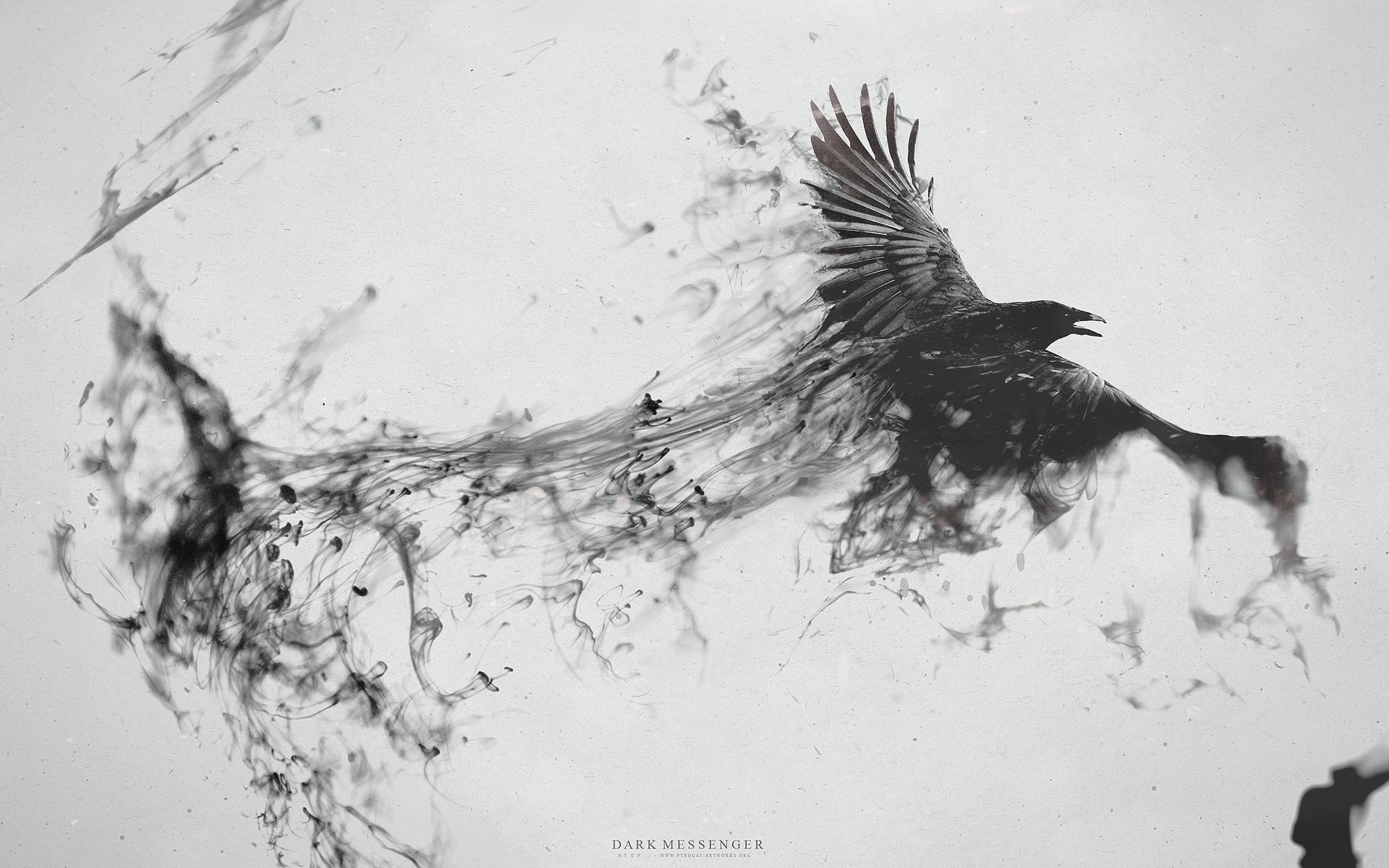 Wallpaper Illustration Animals Abstract Raven Crow