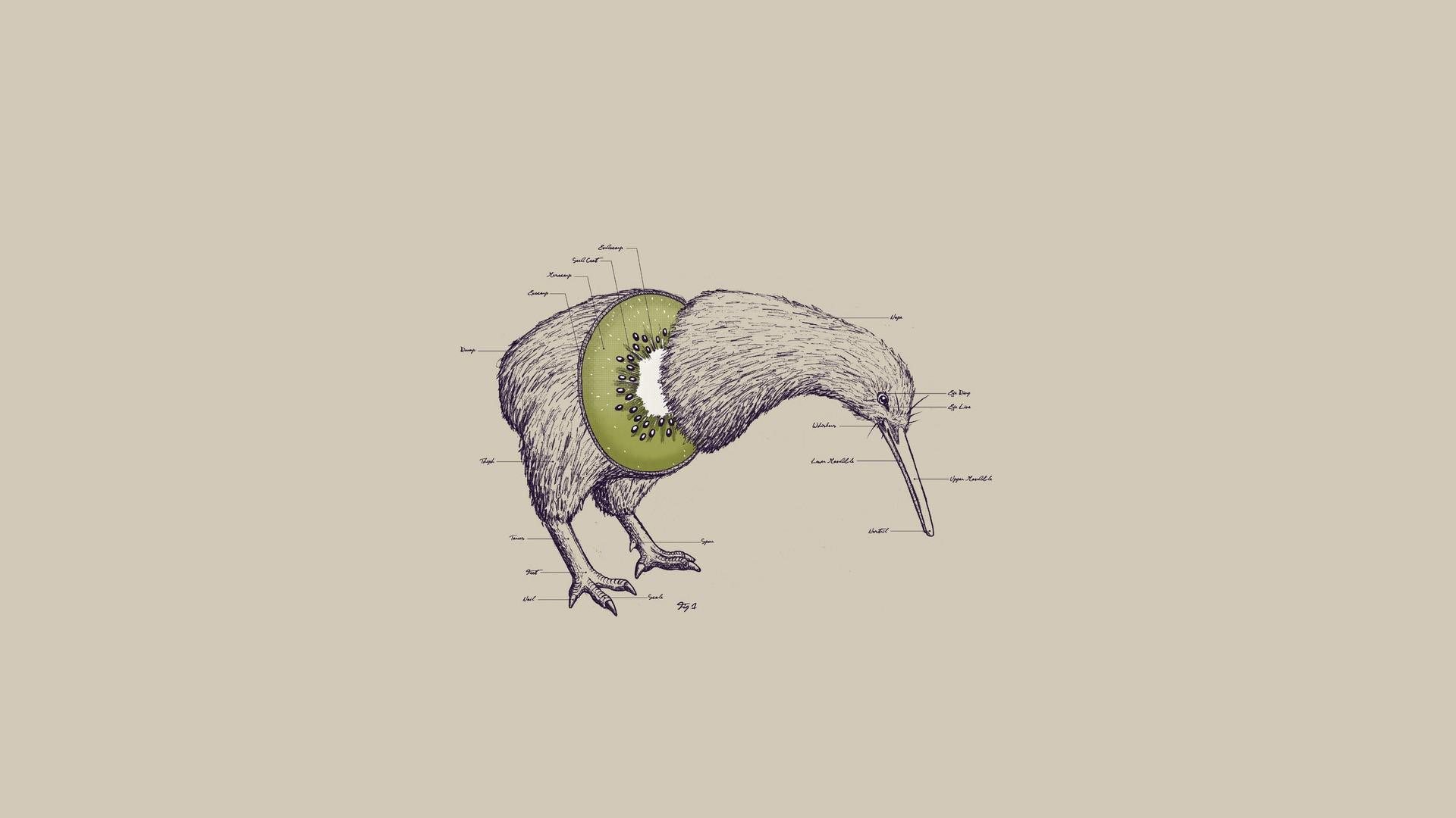 Wallpaper Ilustrasi Karya Seni Gambar Kartun Kiwi Hewan