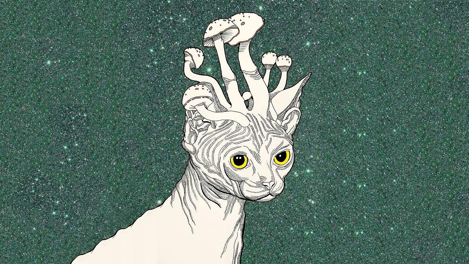 Good Wallpaper Mac Trippy - drawing-illustration-cat-cartoon-ART-mushrooms-sketch-trippy-stoner-571782  Collection_599054.jpg