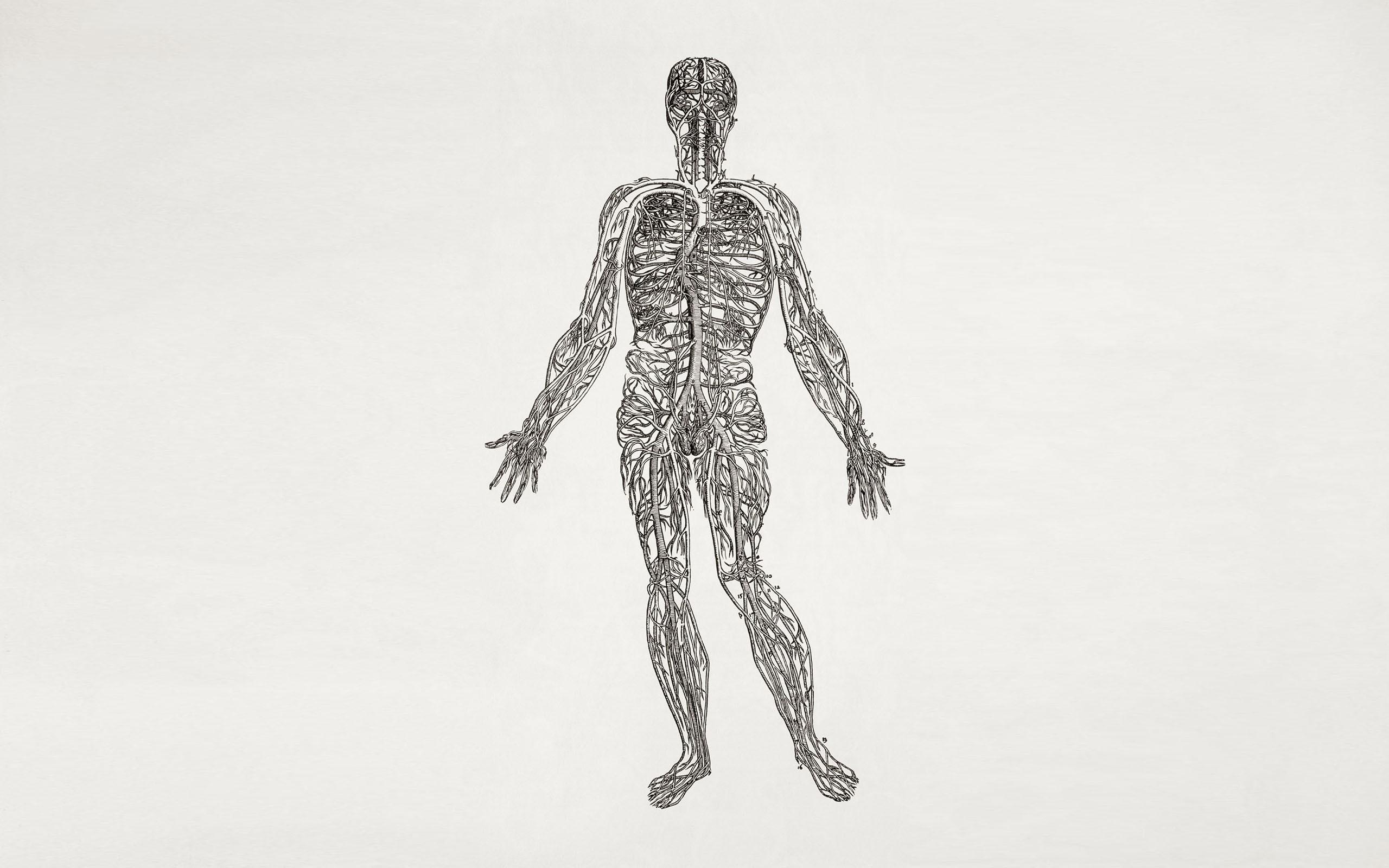 Hintergrundbilder : Illustration, Skelett, Biologie, Arm, skizzieren ...