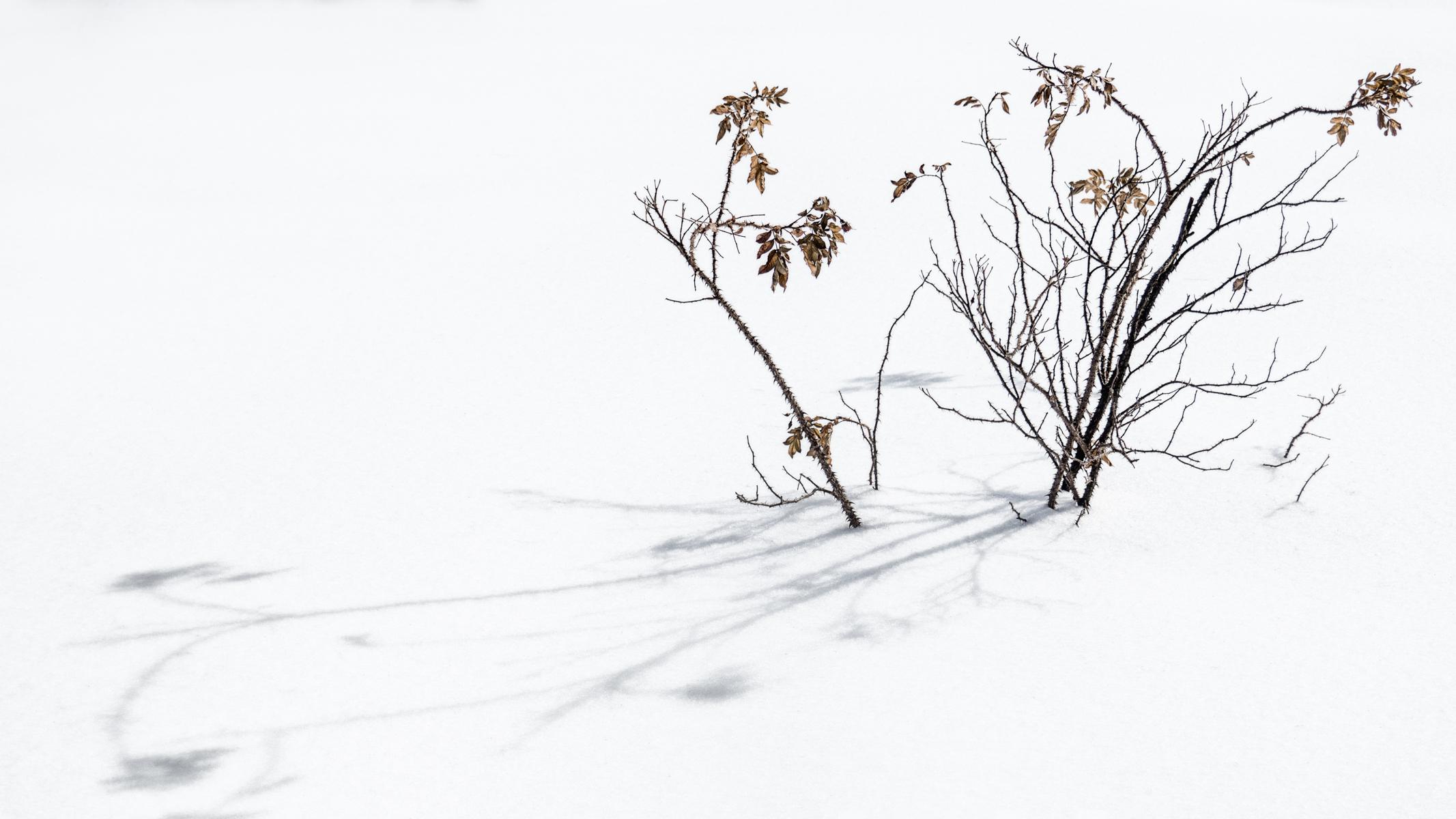 Fond D écran Dessin Ombre Neige Hiver Branche Gel Rose