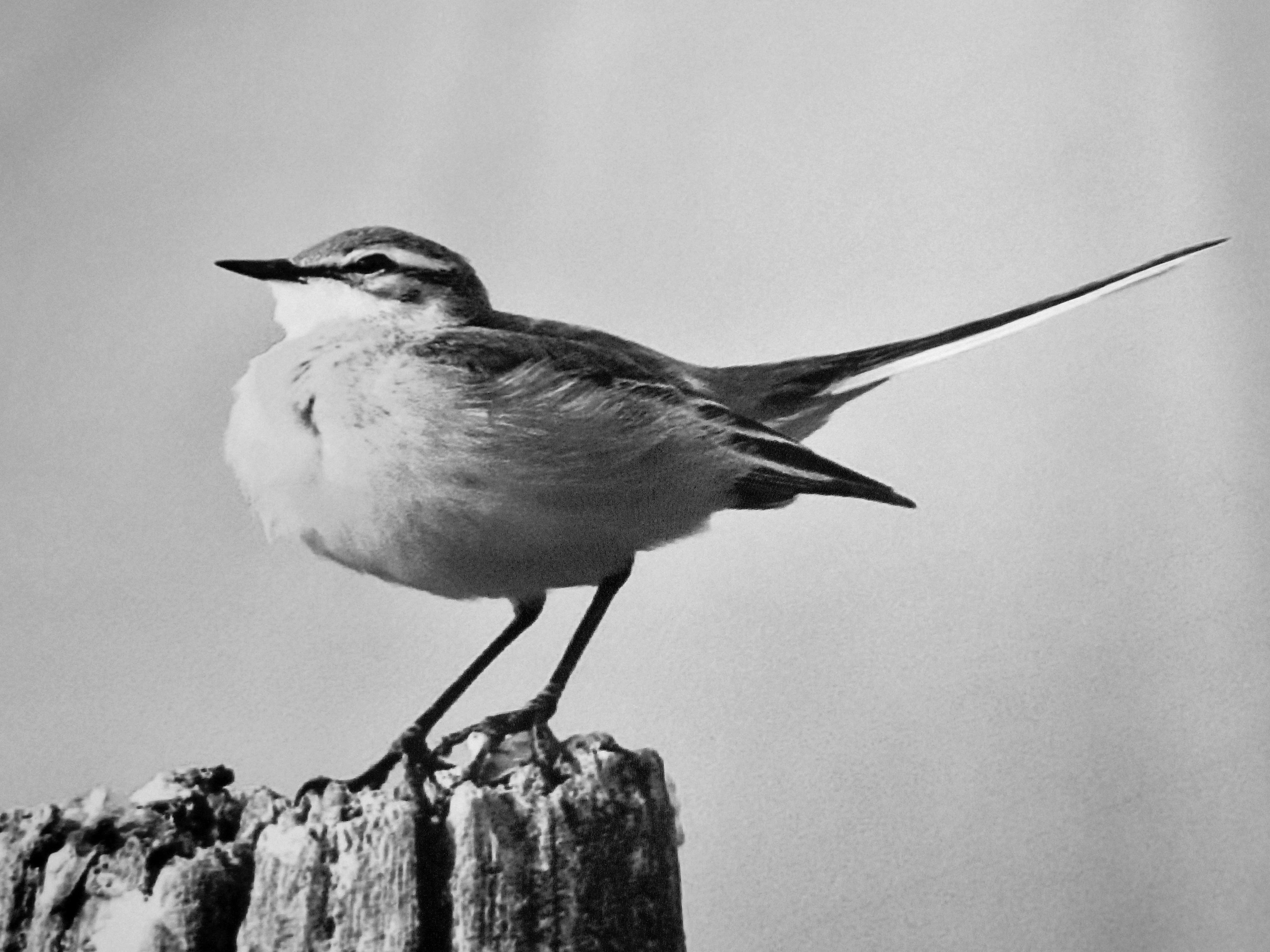 Fond Décran Dessin Des Oiseaux Monochrome La Nature