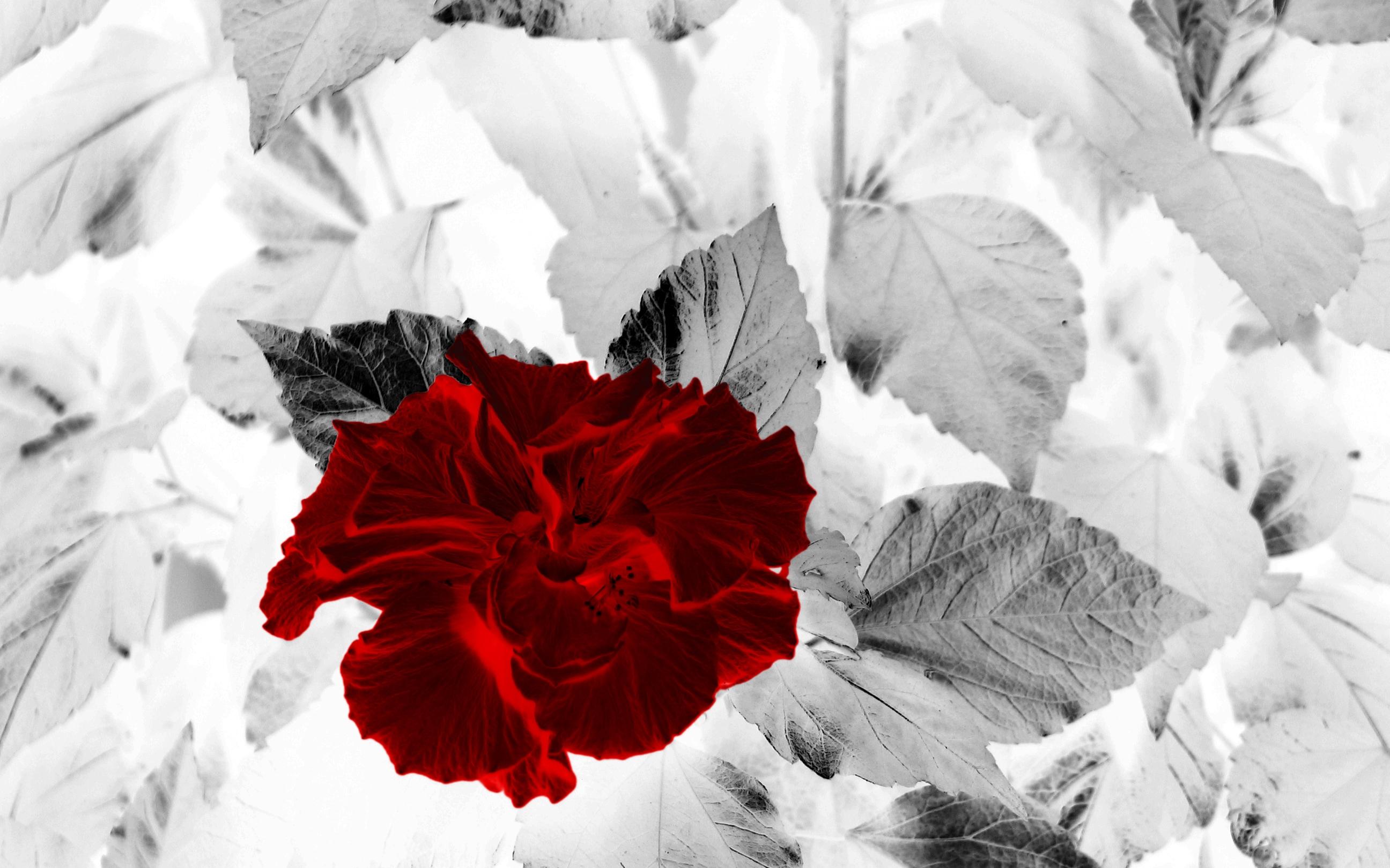 Открытки добрым, открытки красное на белом