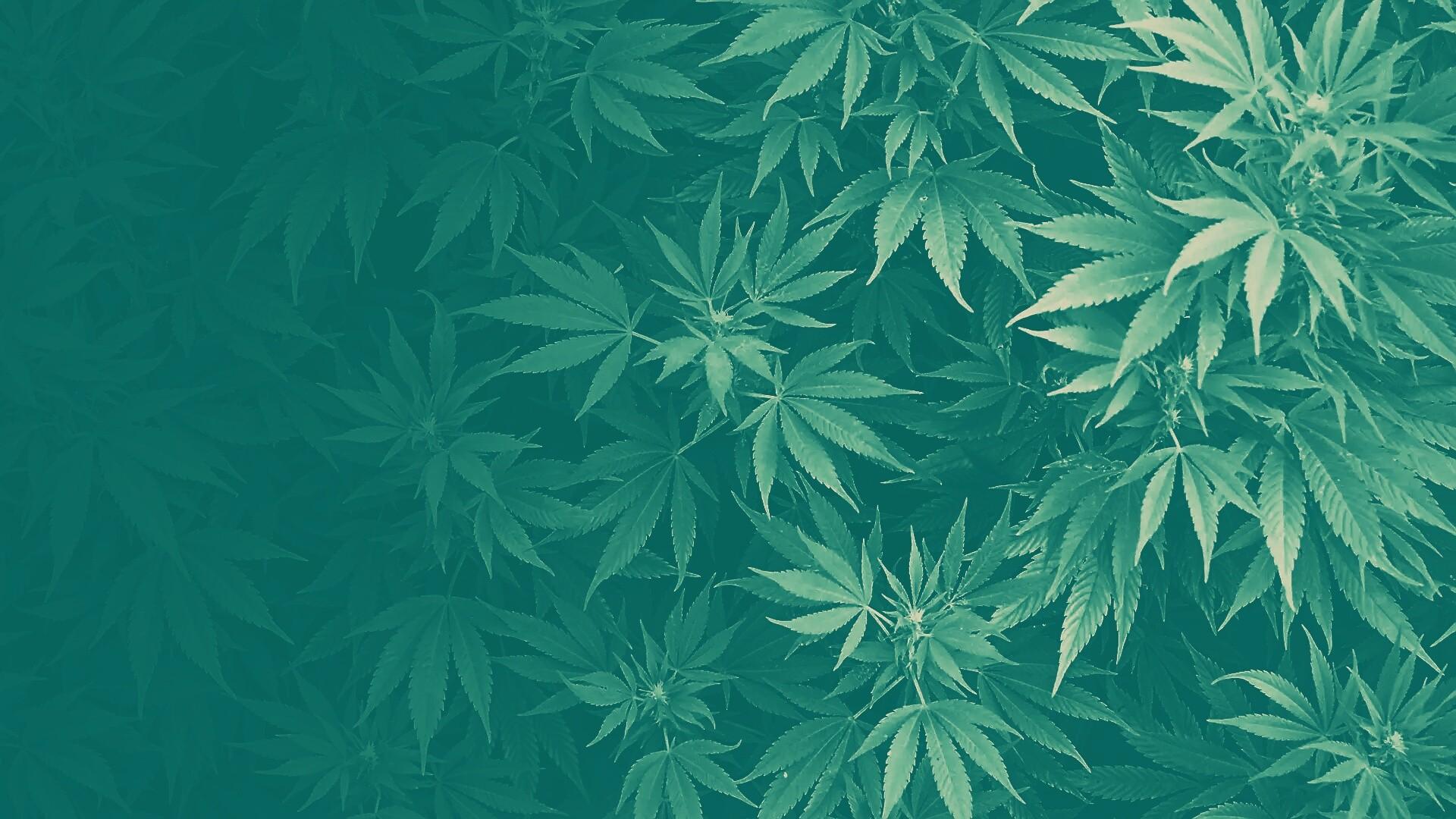 Картинки конопля для фона курение марихуаны и похудение