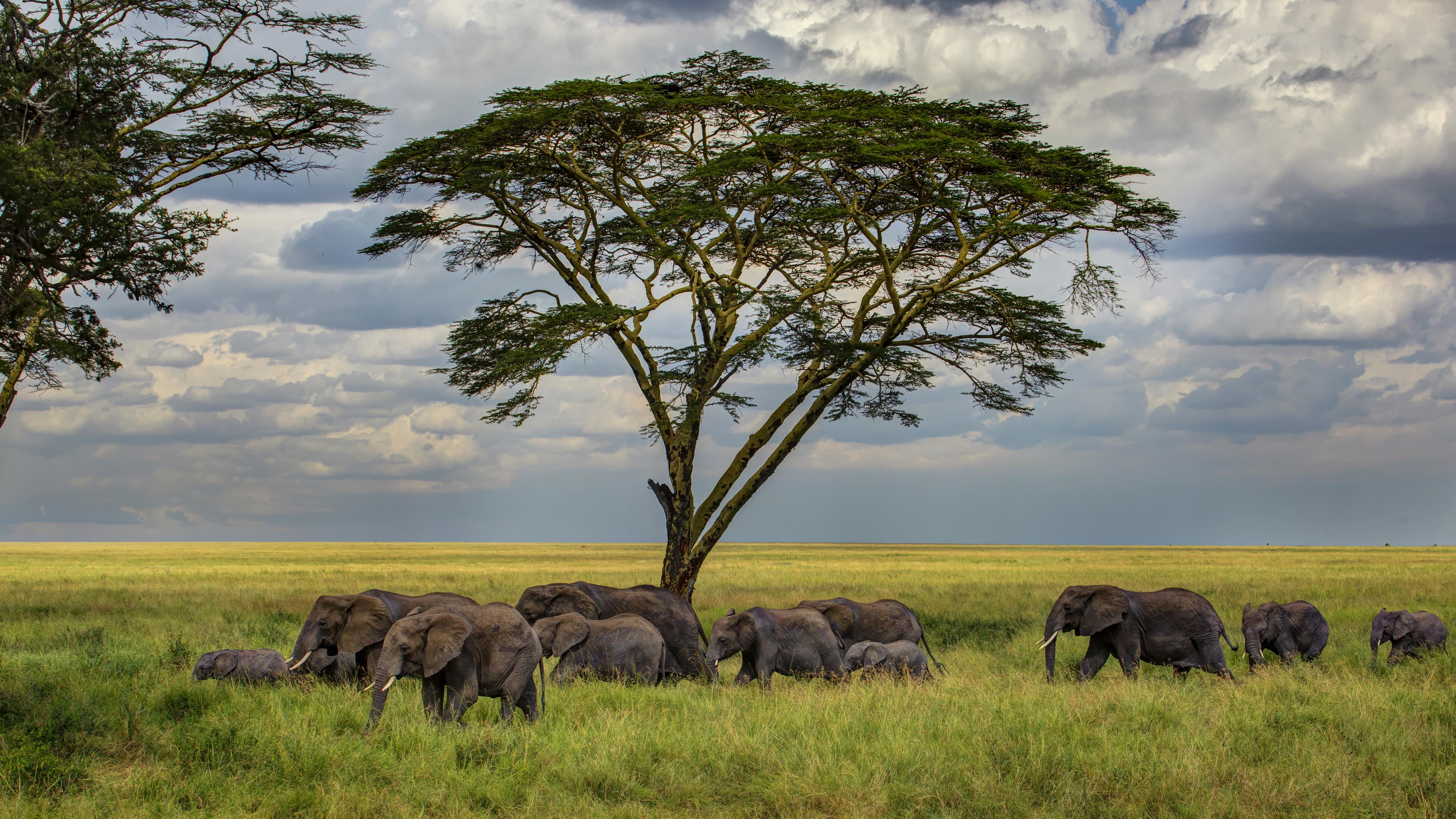 Картинки к теме африка