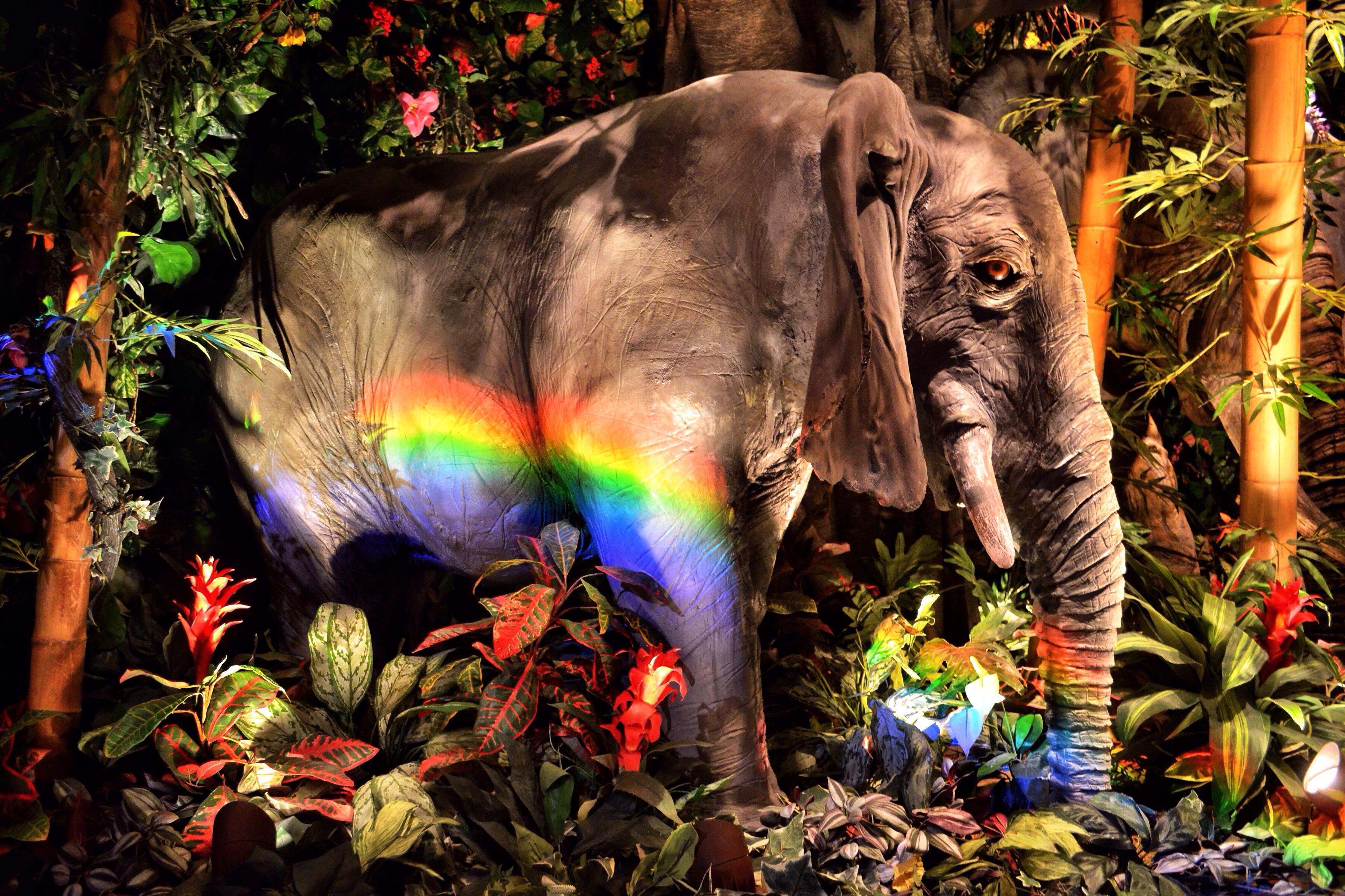Картинки басен слон и моська пейзаж