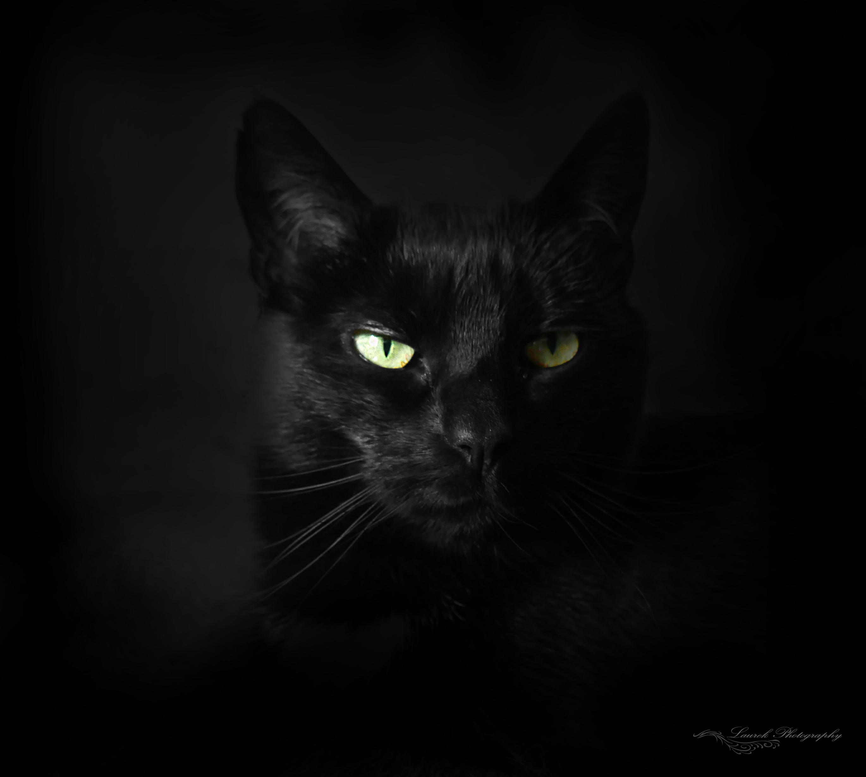 картинки на рабочий стол кошки черные злая портрет барнауле фото
