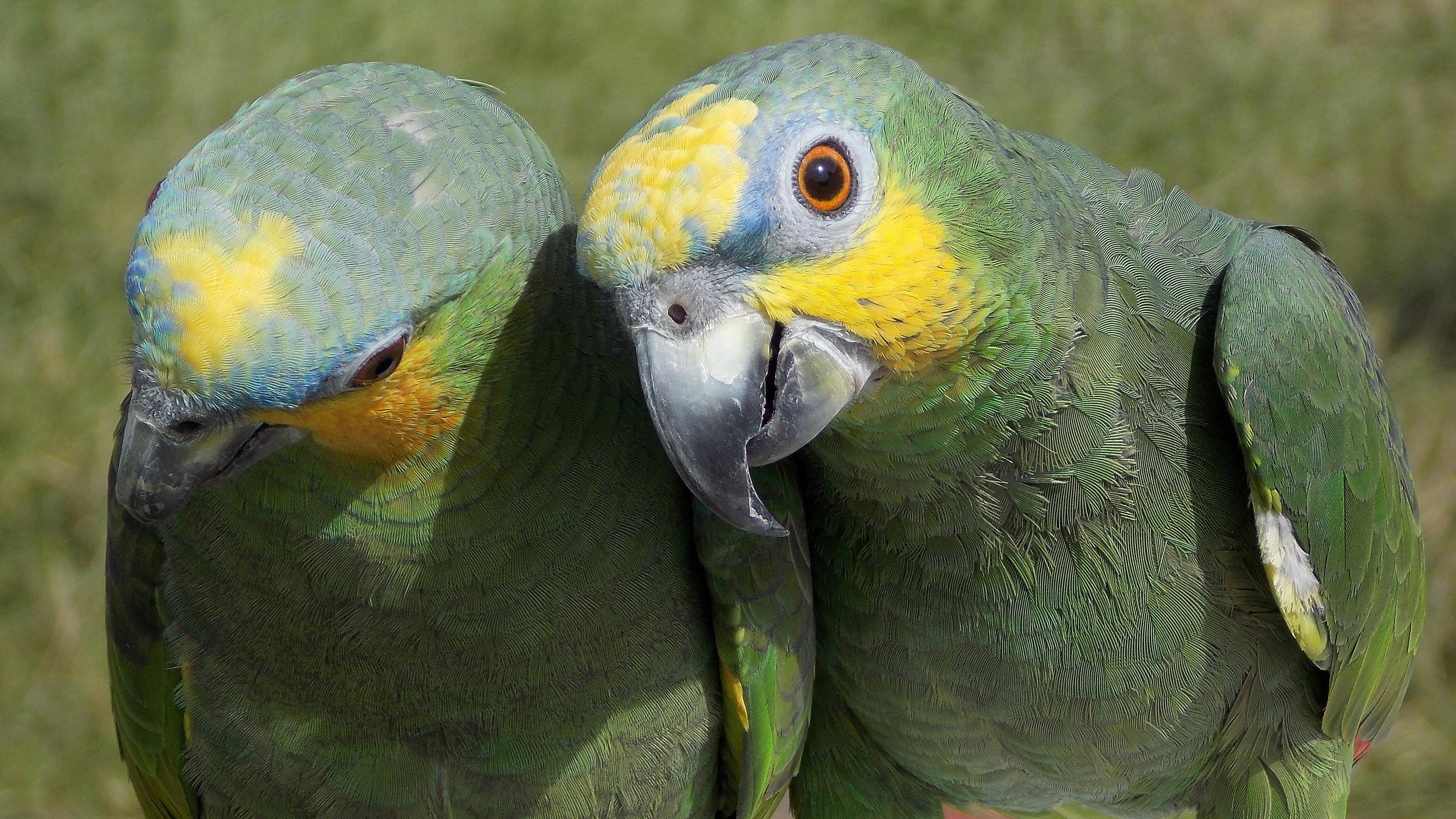 fond d 39 cran les yeux la nature perroquet ailes plumes fermer vert jaune bleu orange. Black Bedroom Furniture Sets. Home Design Ideas