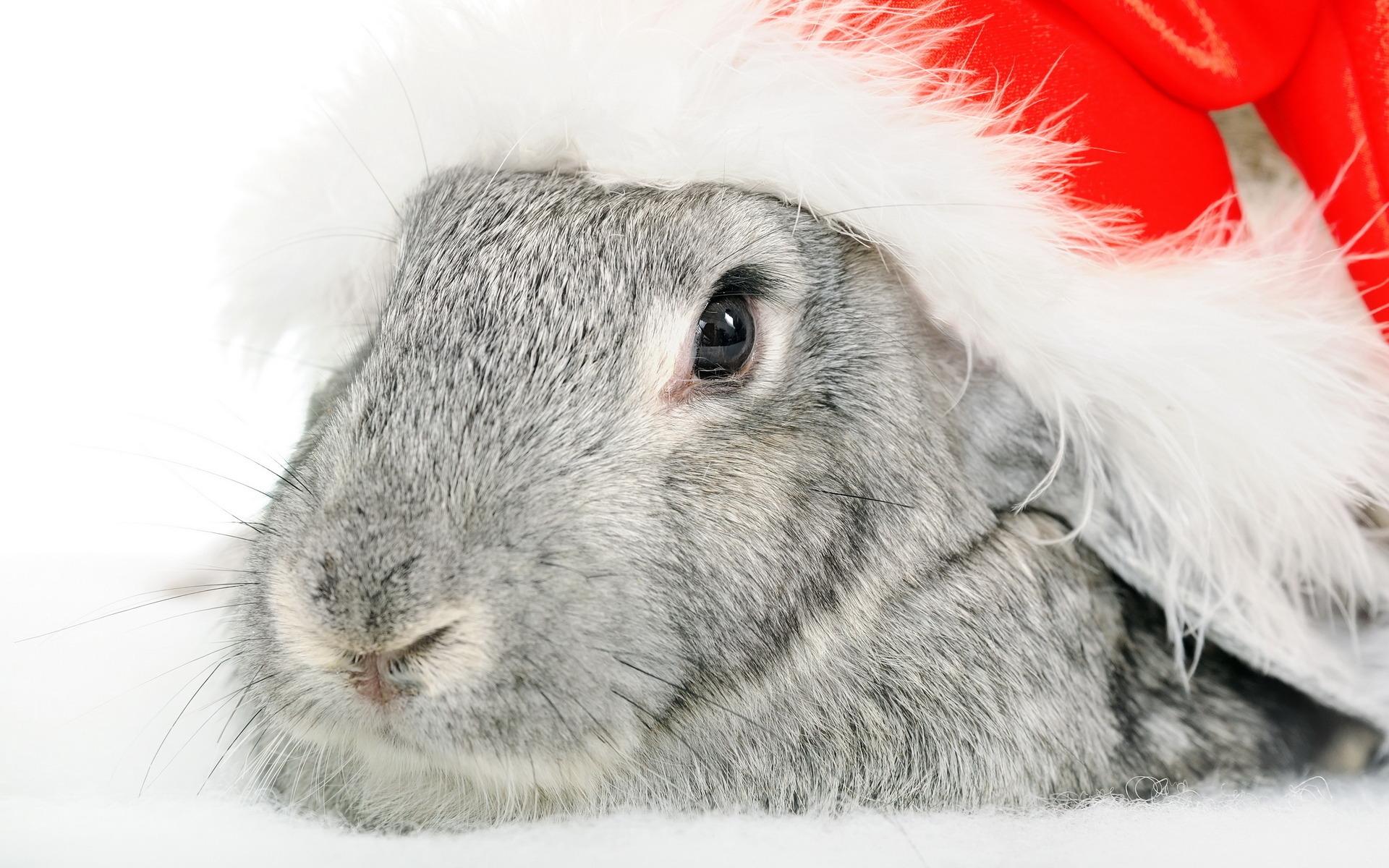 кролик новый год картинка фестиваля этого