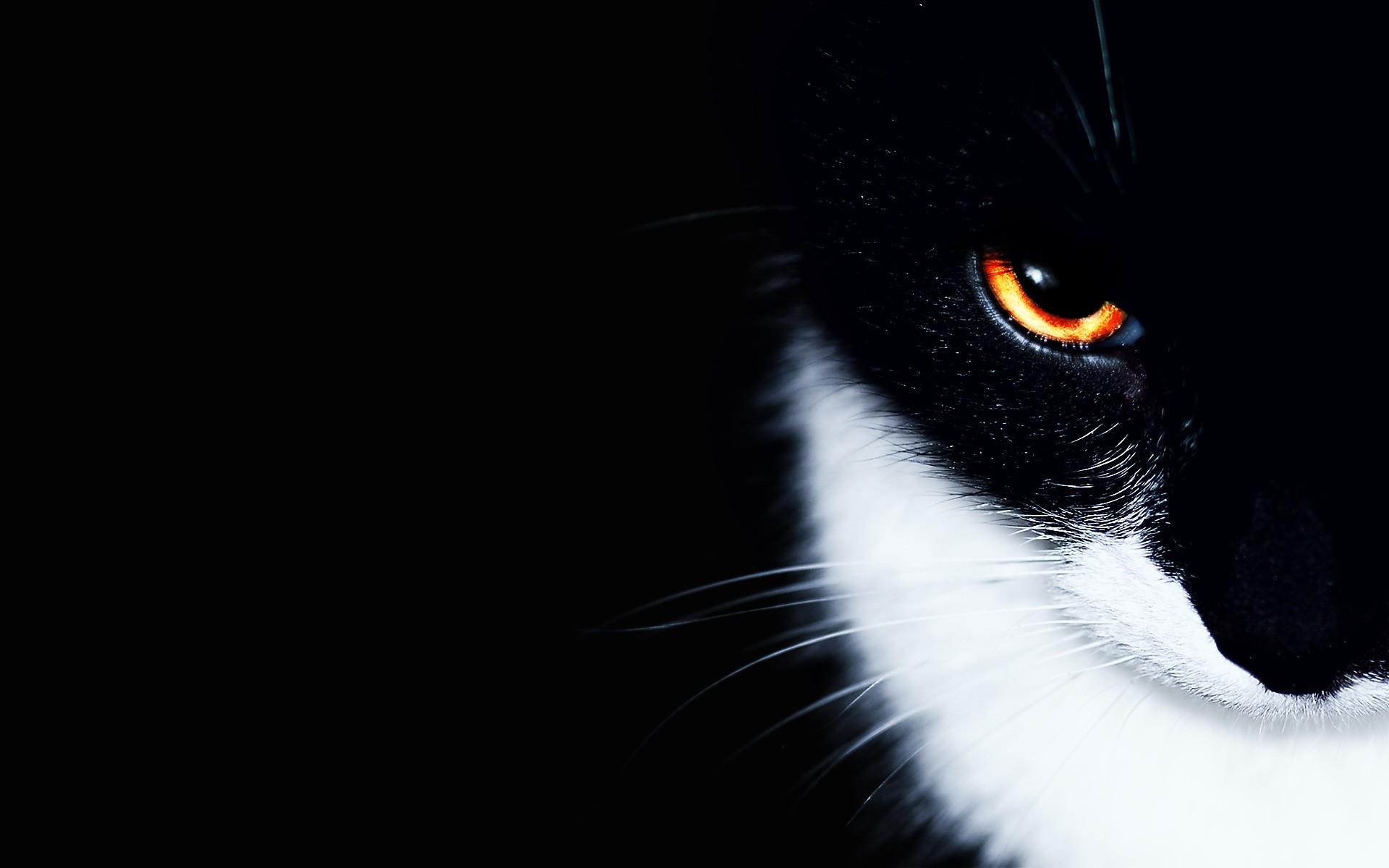 обои на рабочий стол черные кошки на черном фоне № 154866  скачать