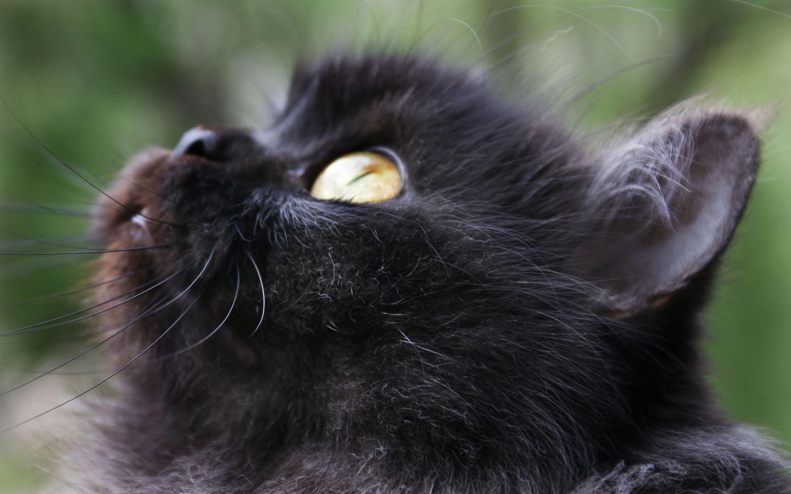 котики пушистики фото черные высыпаний из-за