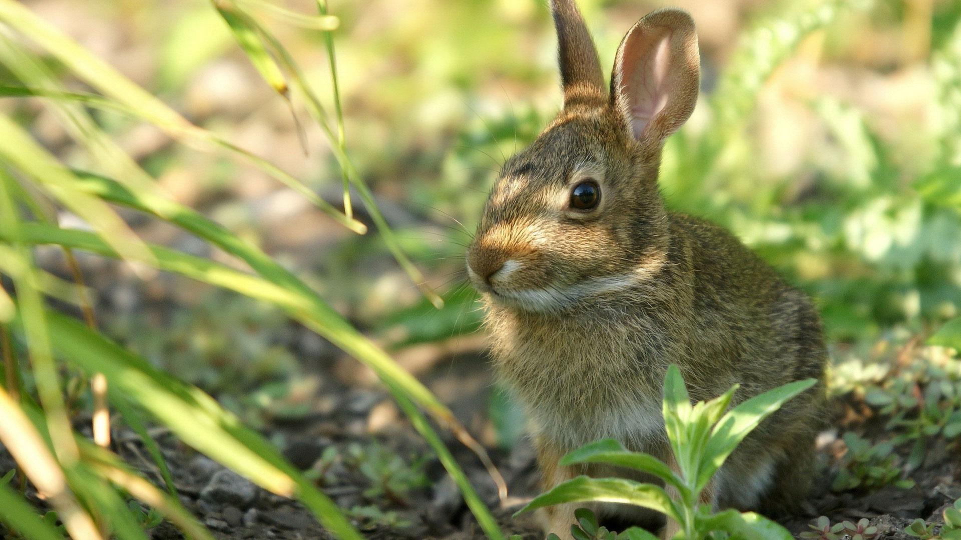 Картинки заяц в природе