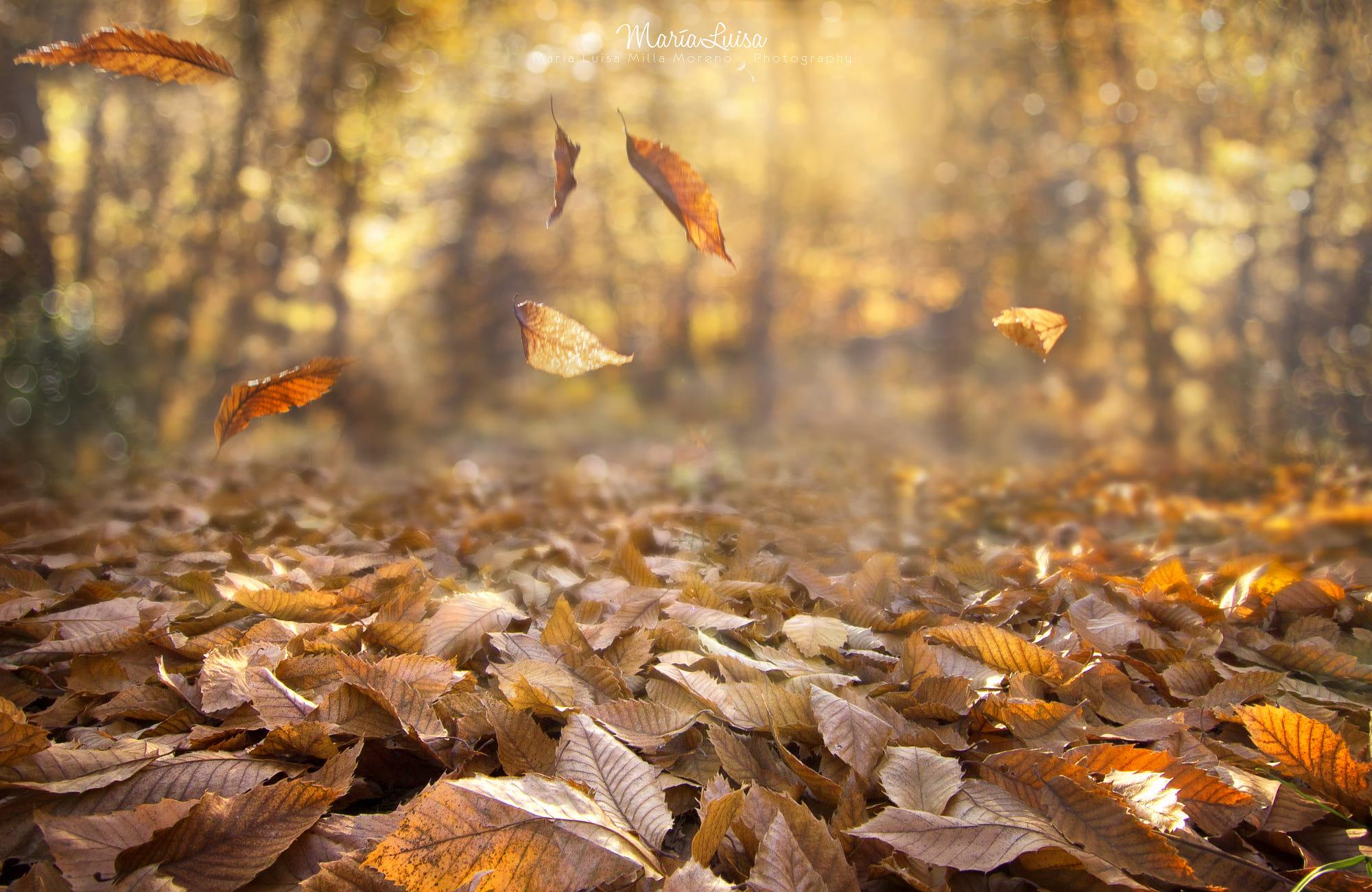 картинки осень листья падают красивые его