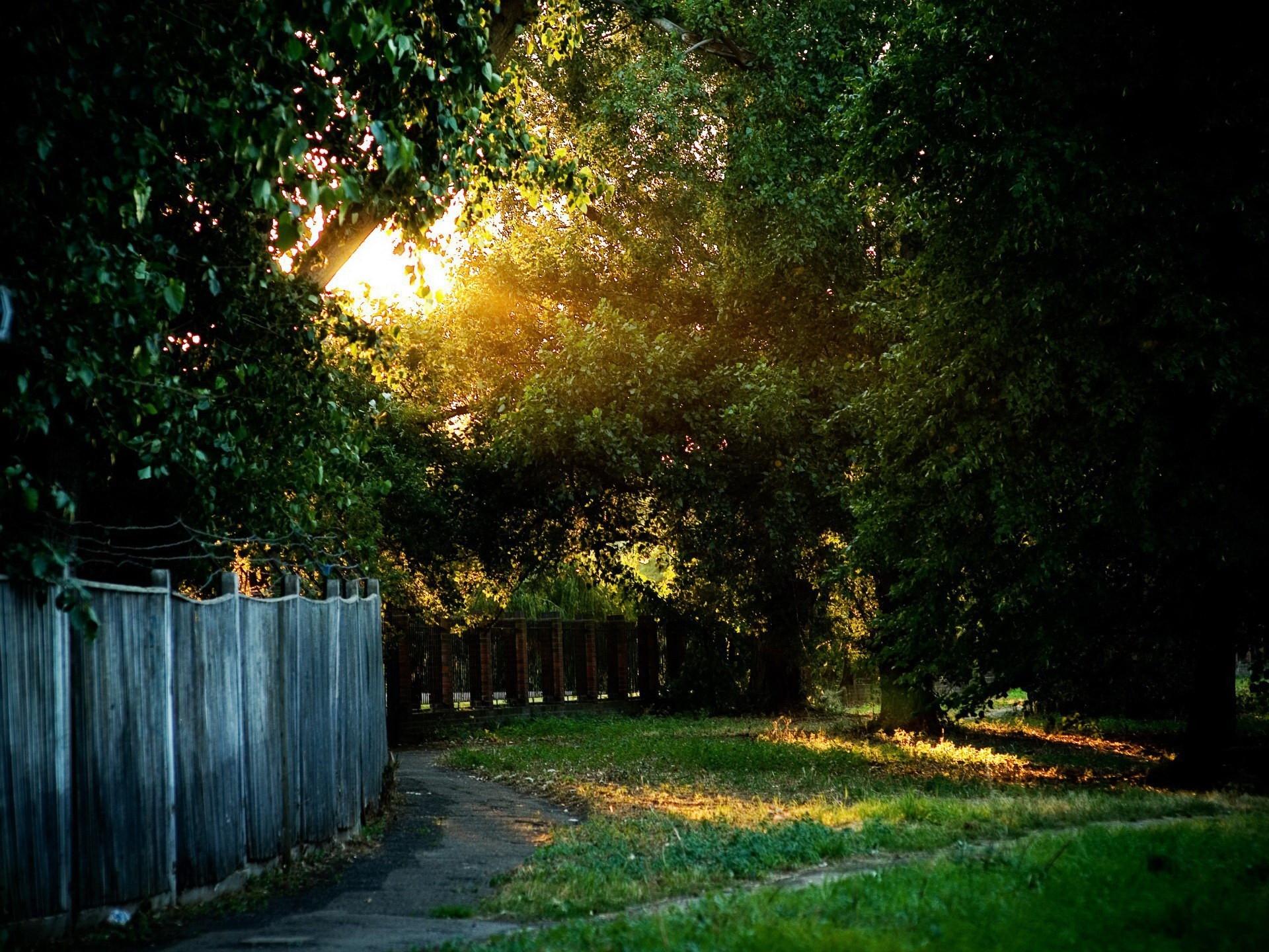 Hintergrundbilder : Zaun, Spur, Bäume, Draht, Garten, Schutz ...
